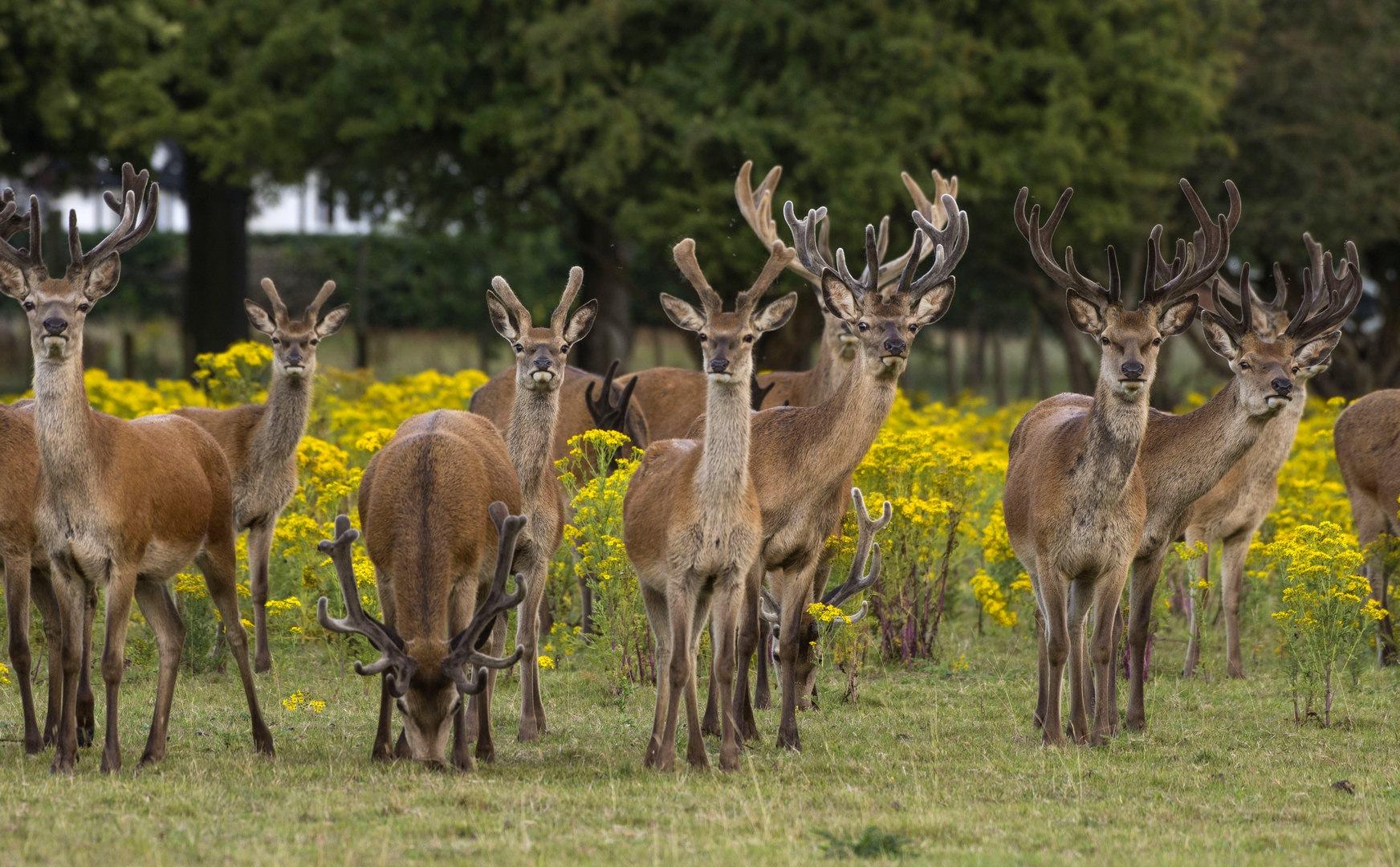 Red Deer by rick.miller.5817300