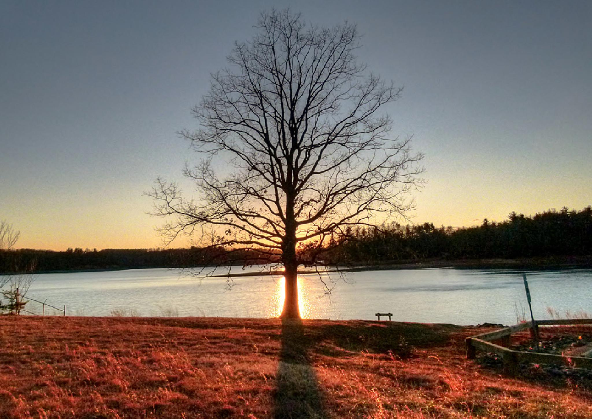 The Tree Sunset by john.hamrick.144