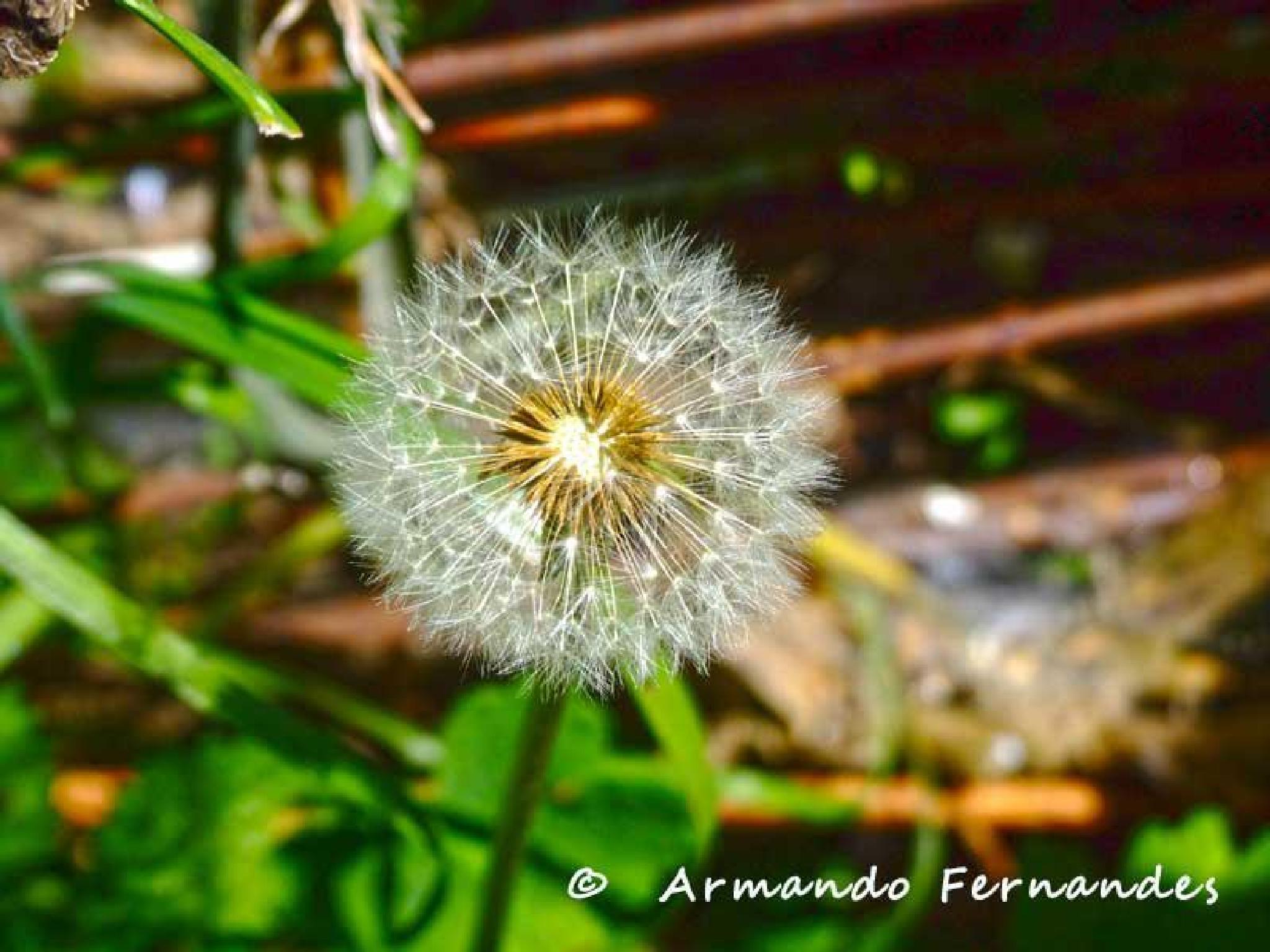 Untitled by ArmandoJorgeFernandes
