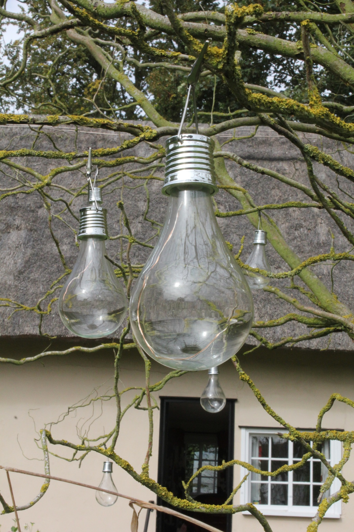 Tree of light by gary.macnicol