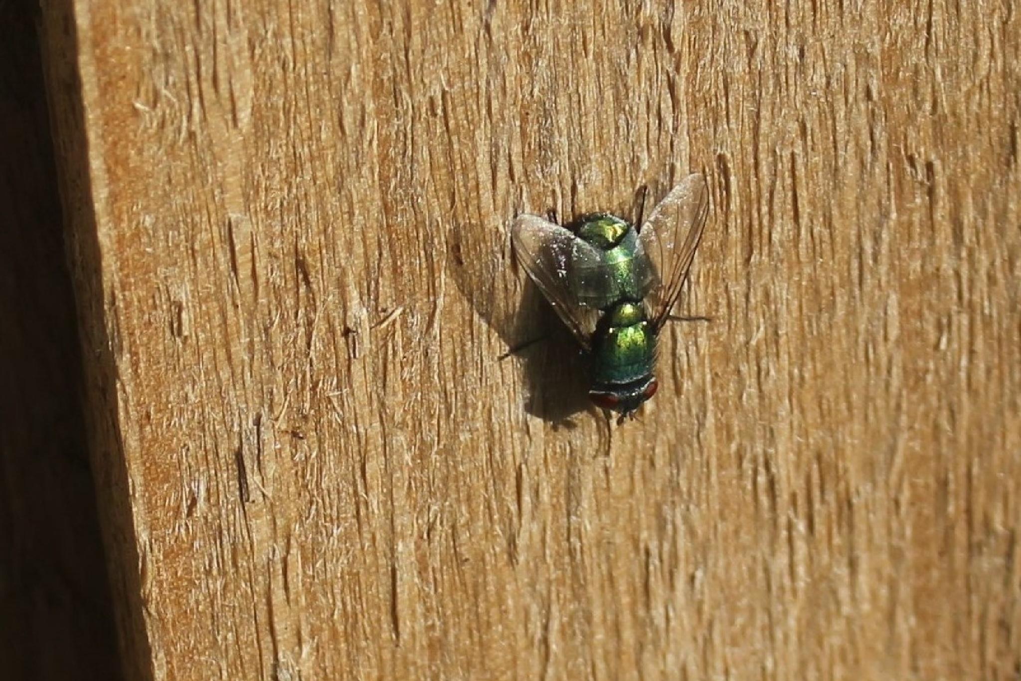 Green fly by gary.macnicol