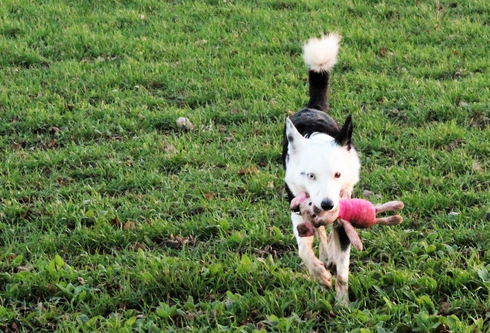 A dog ad his toy by gary.macnicol