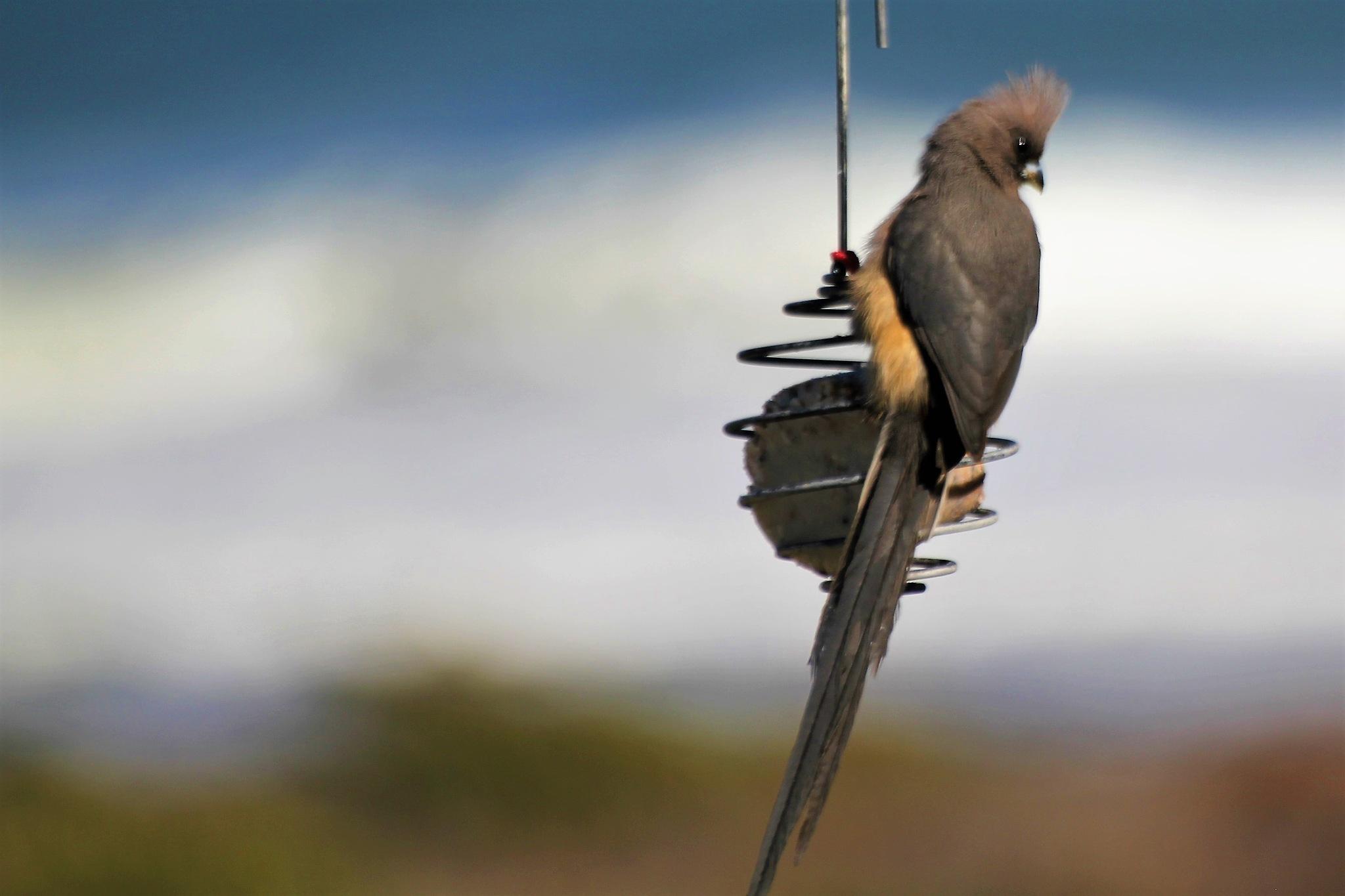 Bird by gary.macnicol