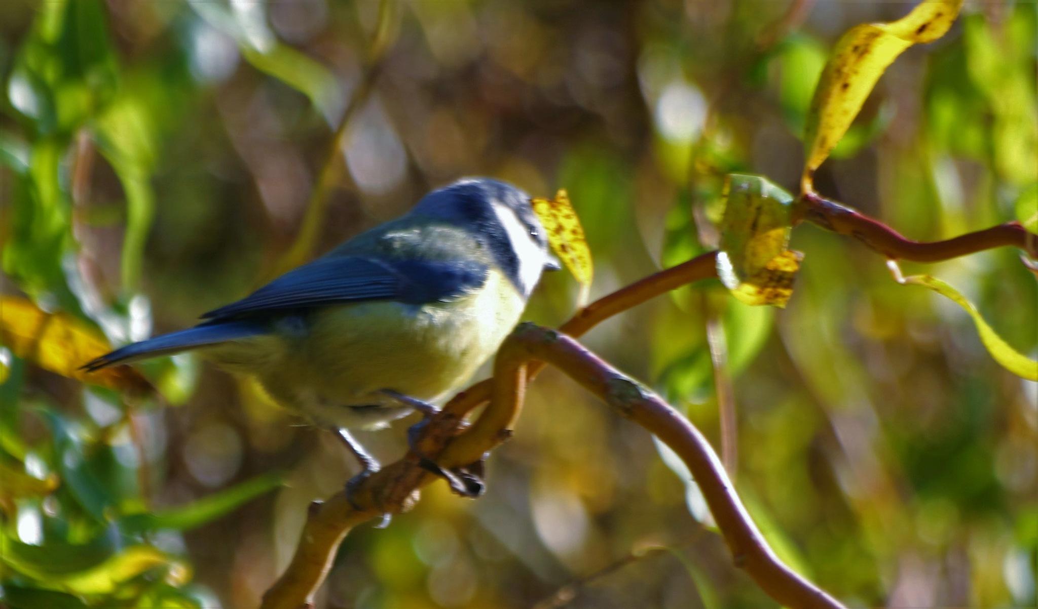 Bird 2 by gary.macnicol