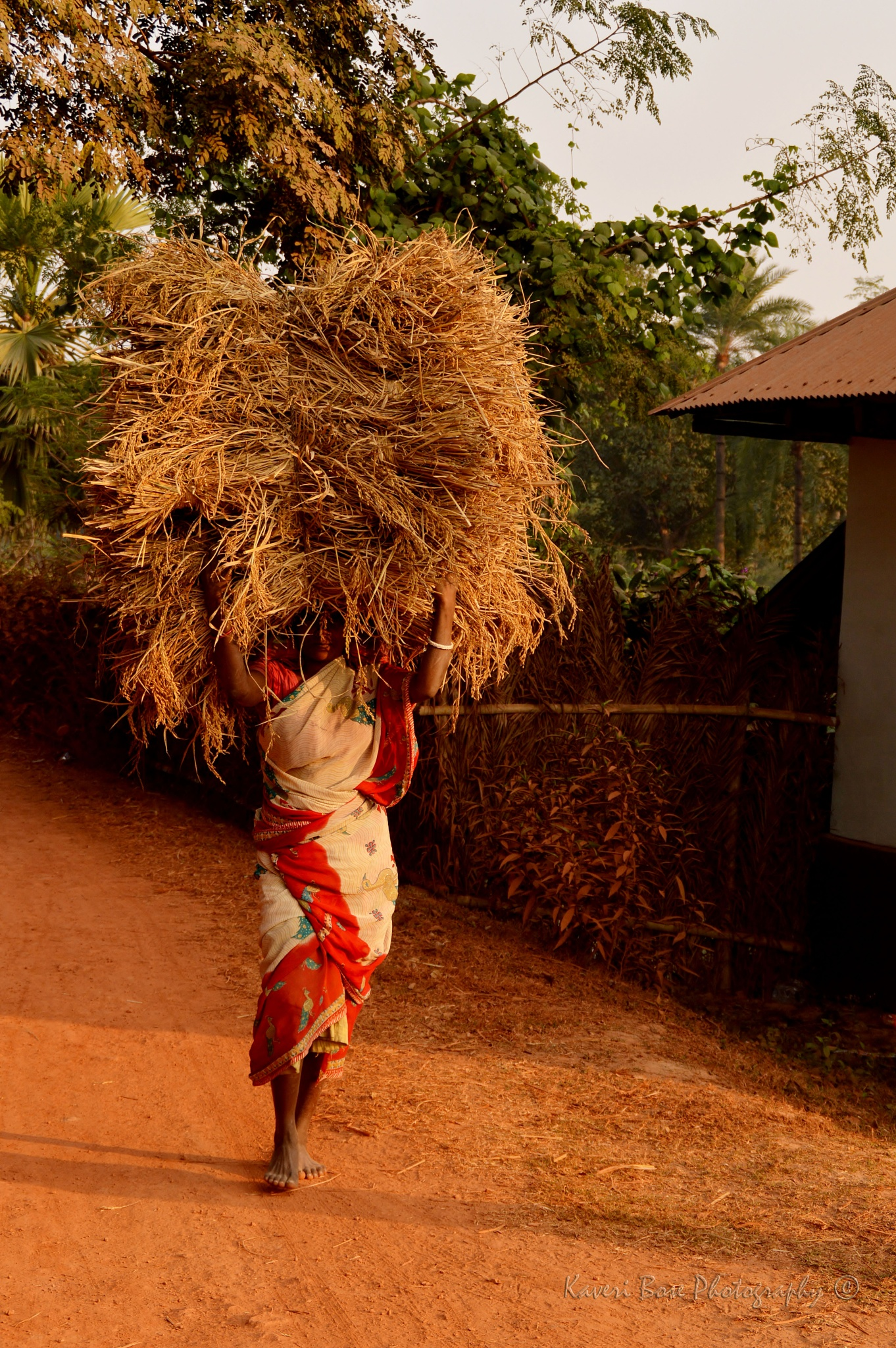 Villager carrying paddy by Kaveri Bose