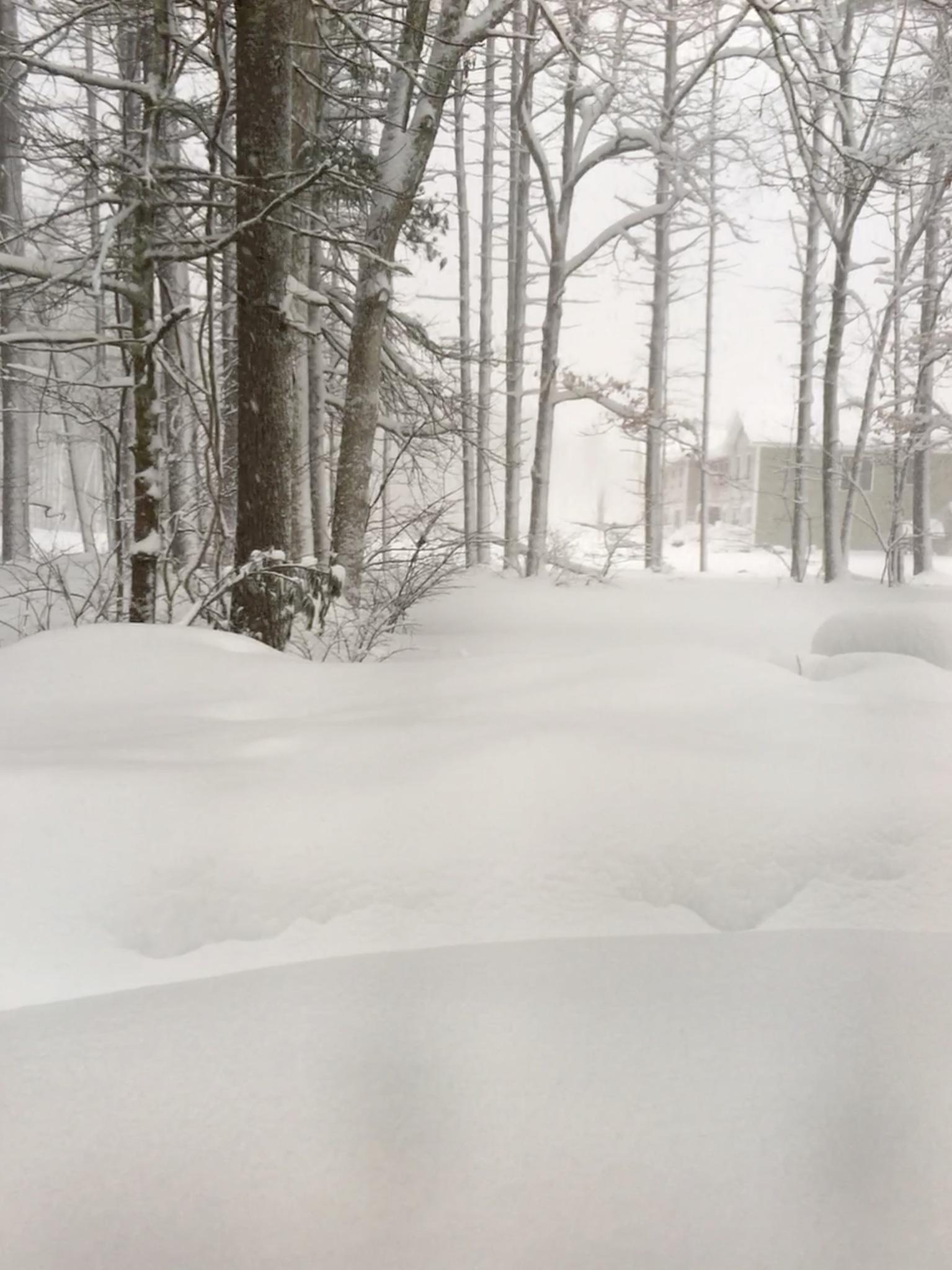 March snow by linda.hamilton.908347