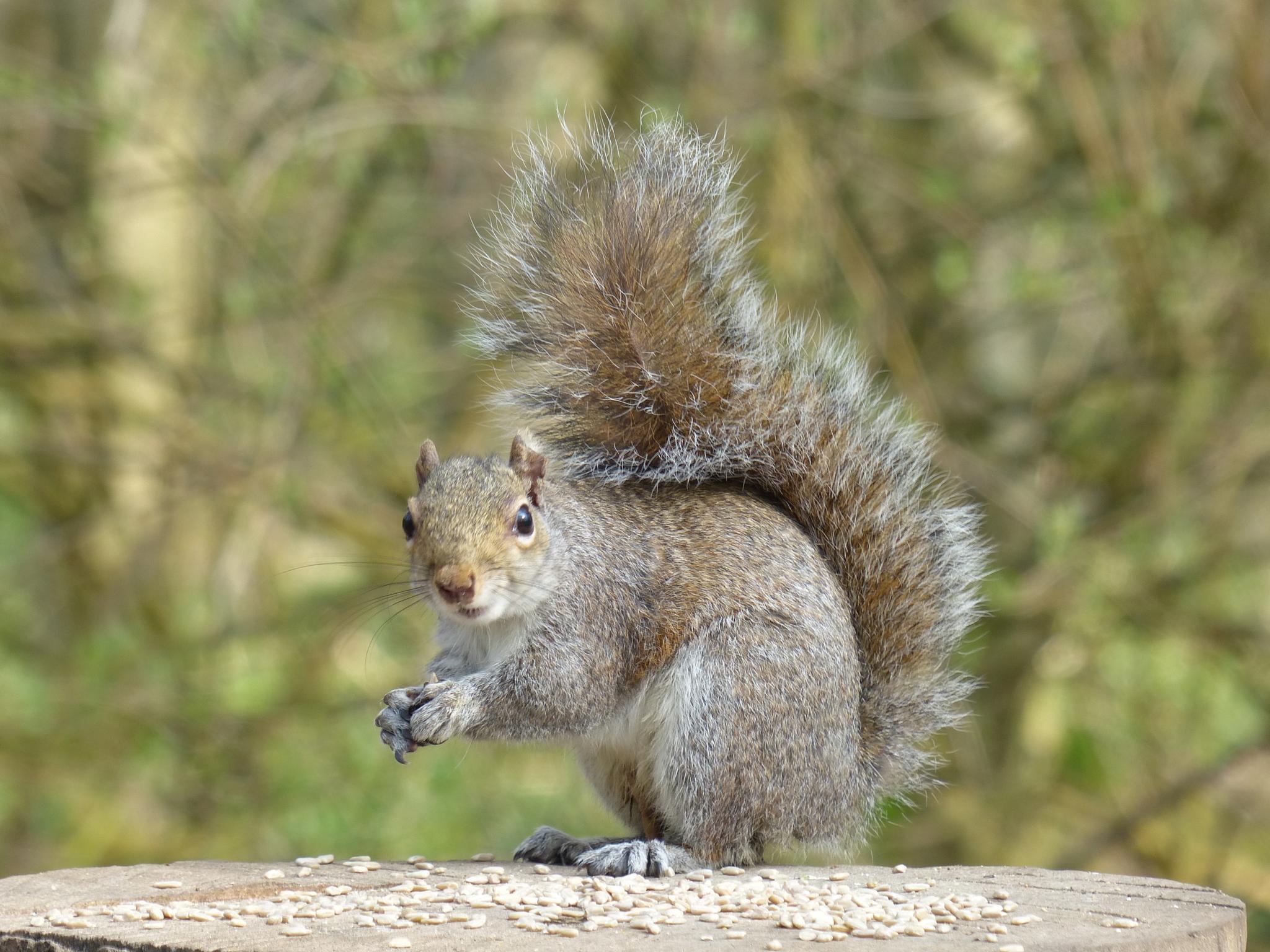 Squirrel by wendy.west.9212