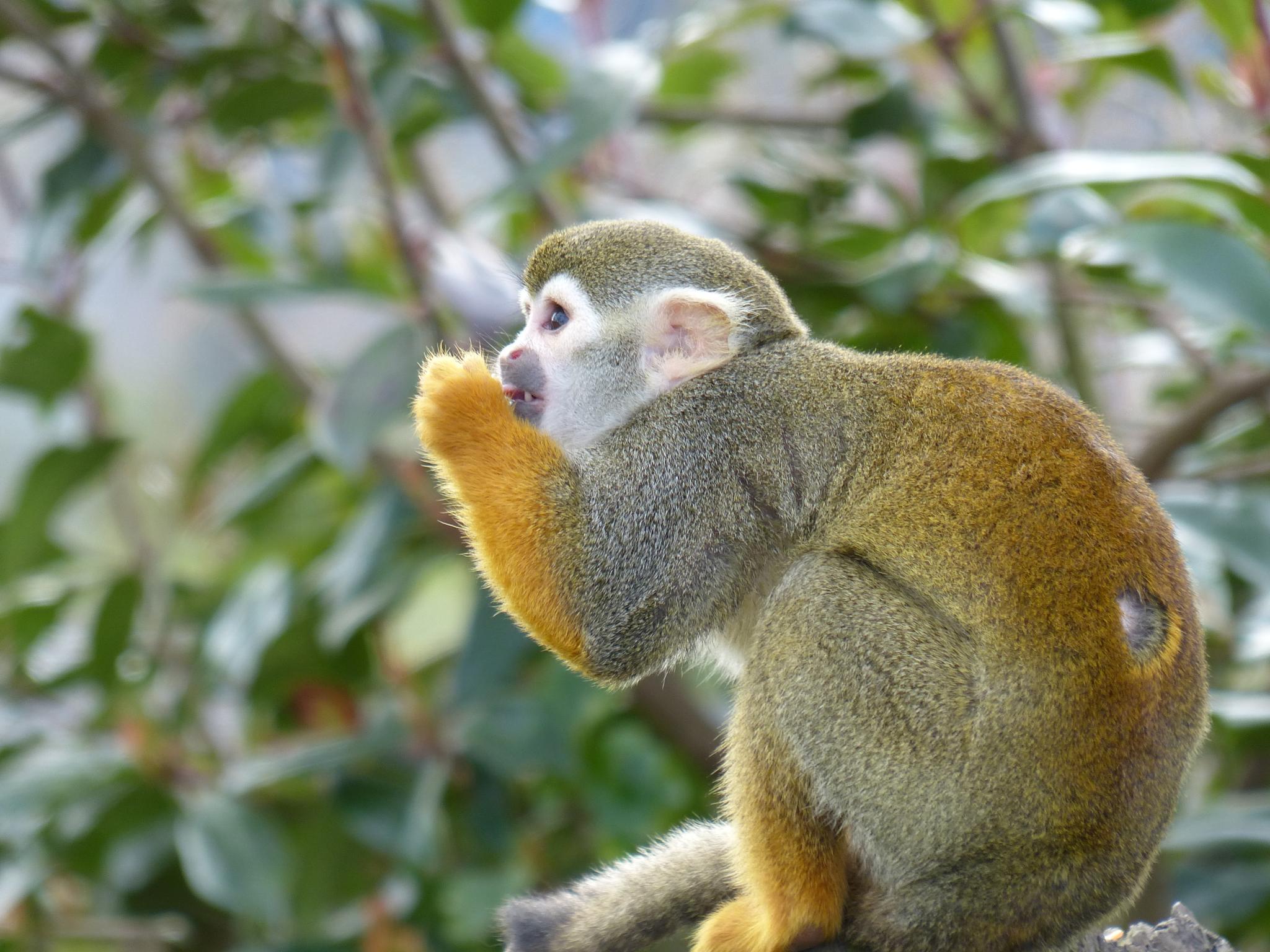 Monkey by wendy.west.9212