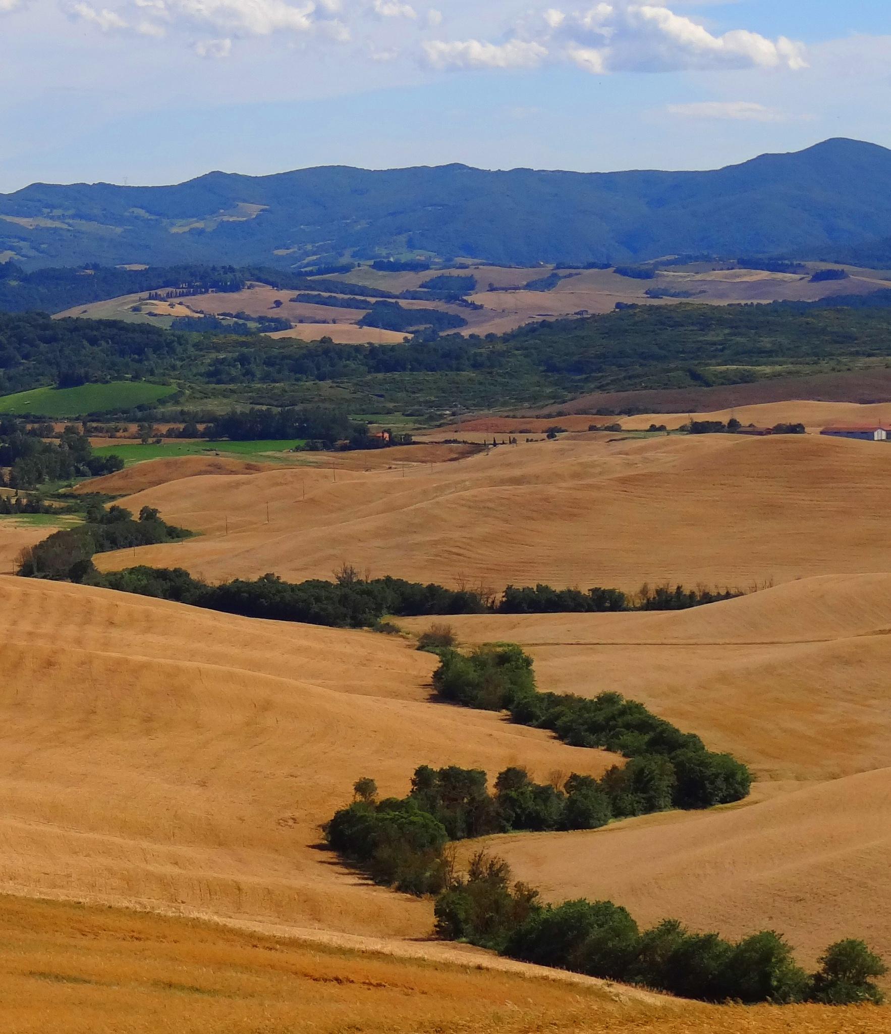 Tuscany by Krystyna Flis