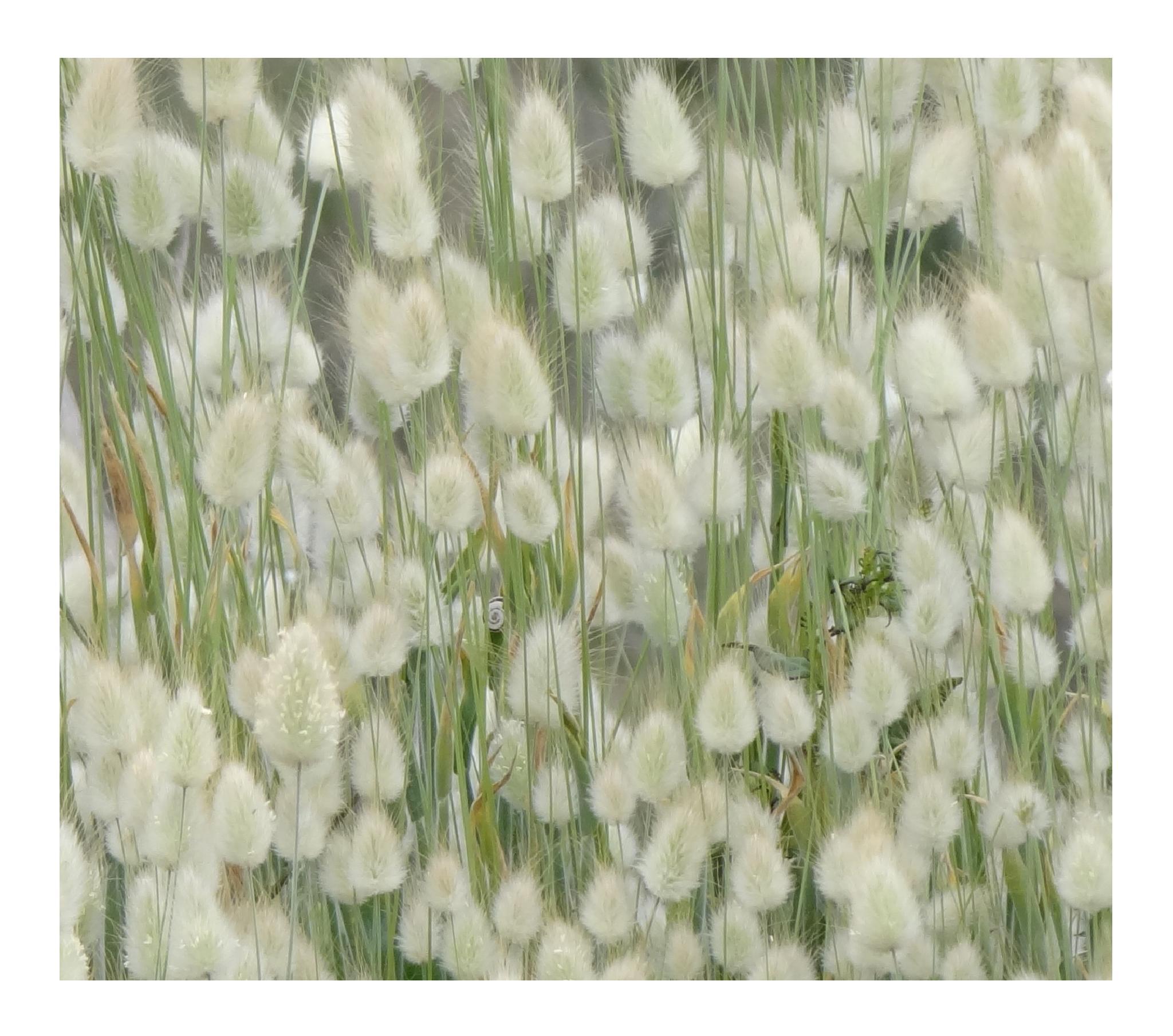 softness by Krystyna Flis