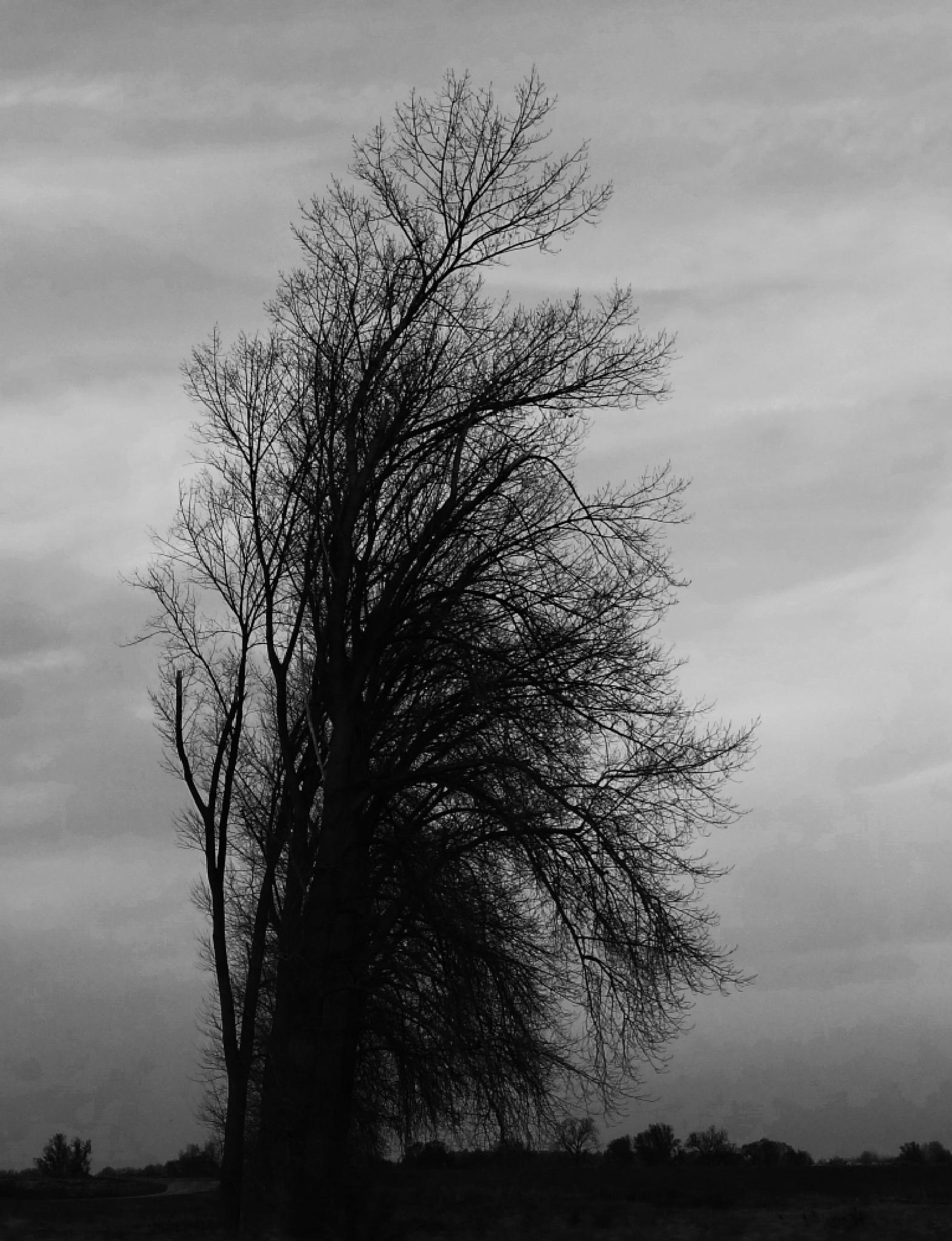 tree by Krystyna Flis