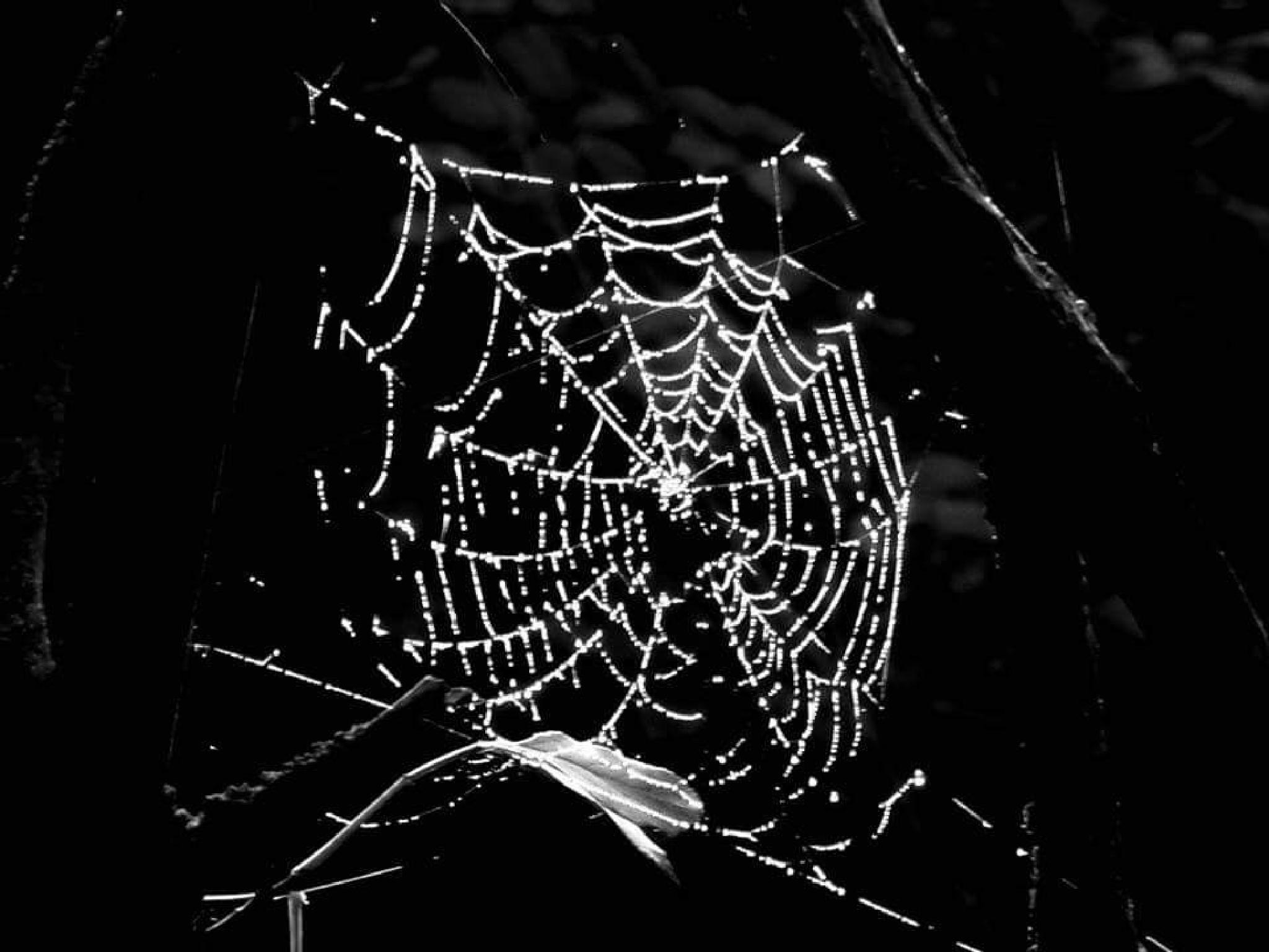Bejewelled web by david.griffith.522