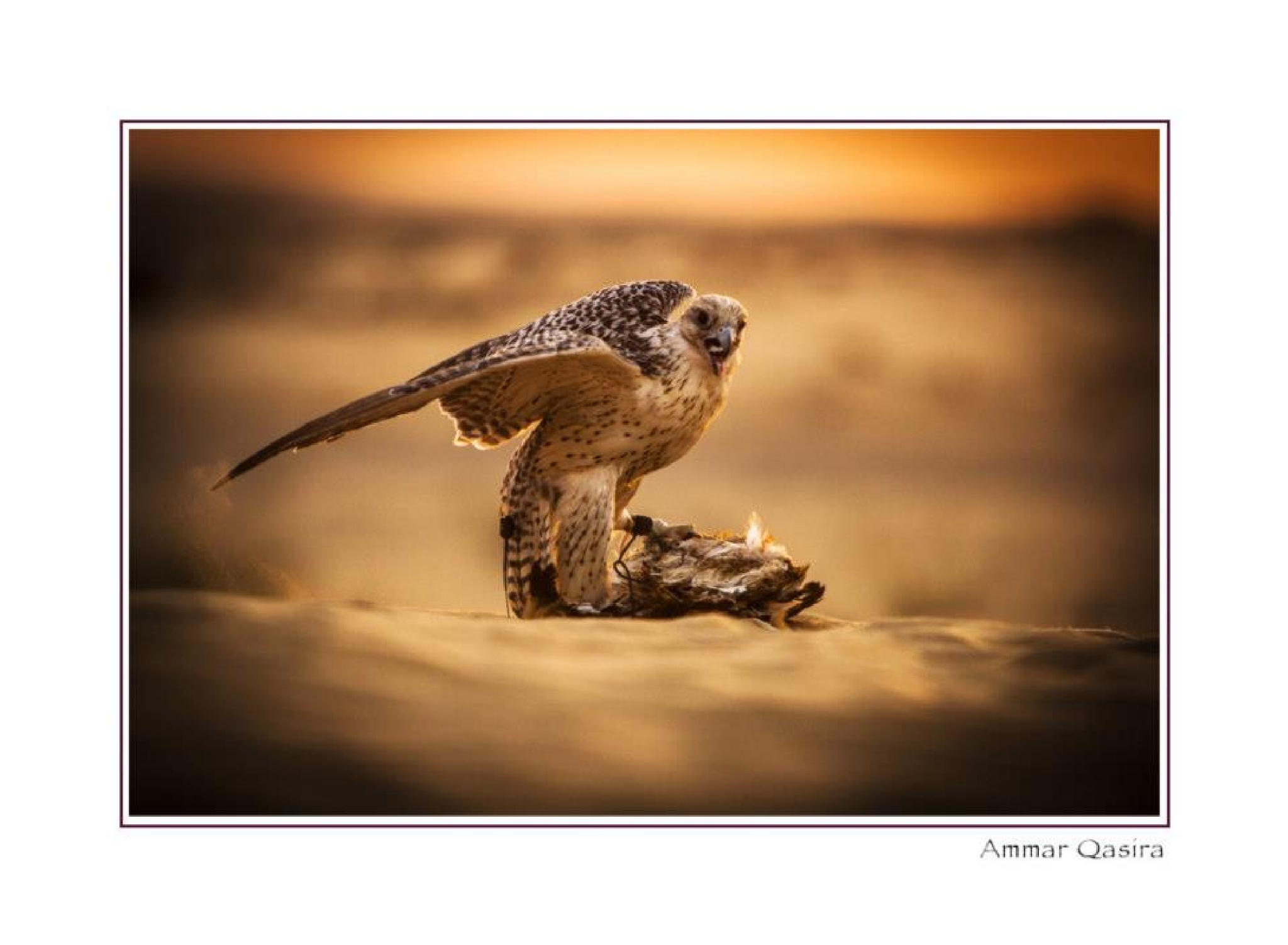 Dubai Desert by ammar.qasira
