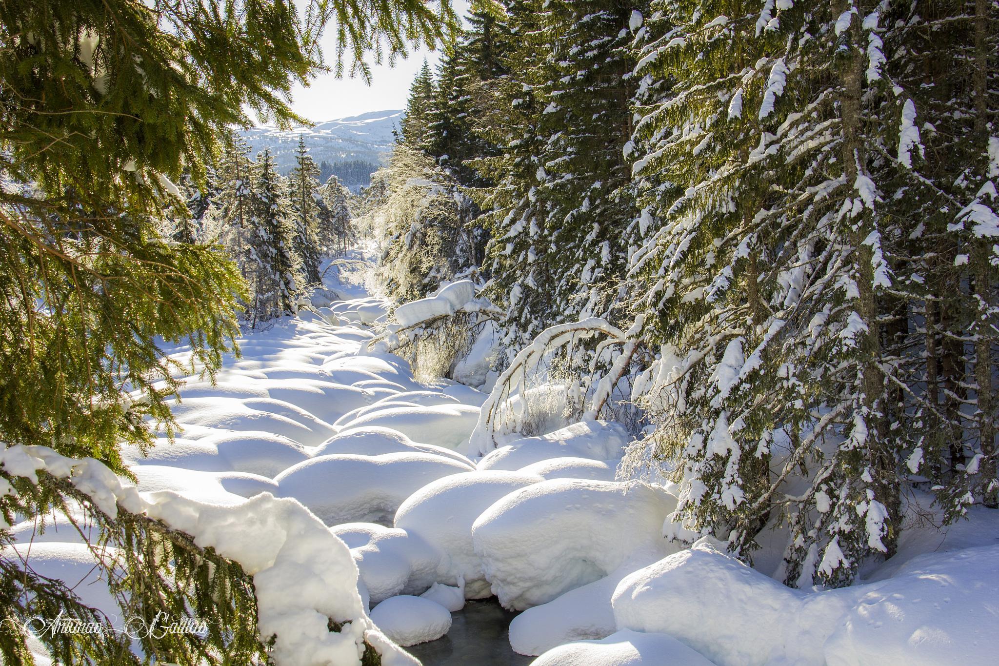 Snow covers the river by Arturas Gailius