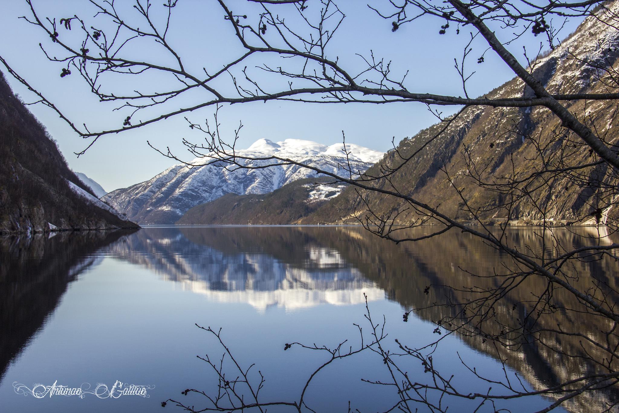 Reflection by Arturas Gailius