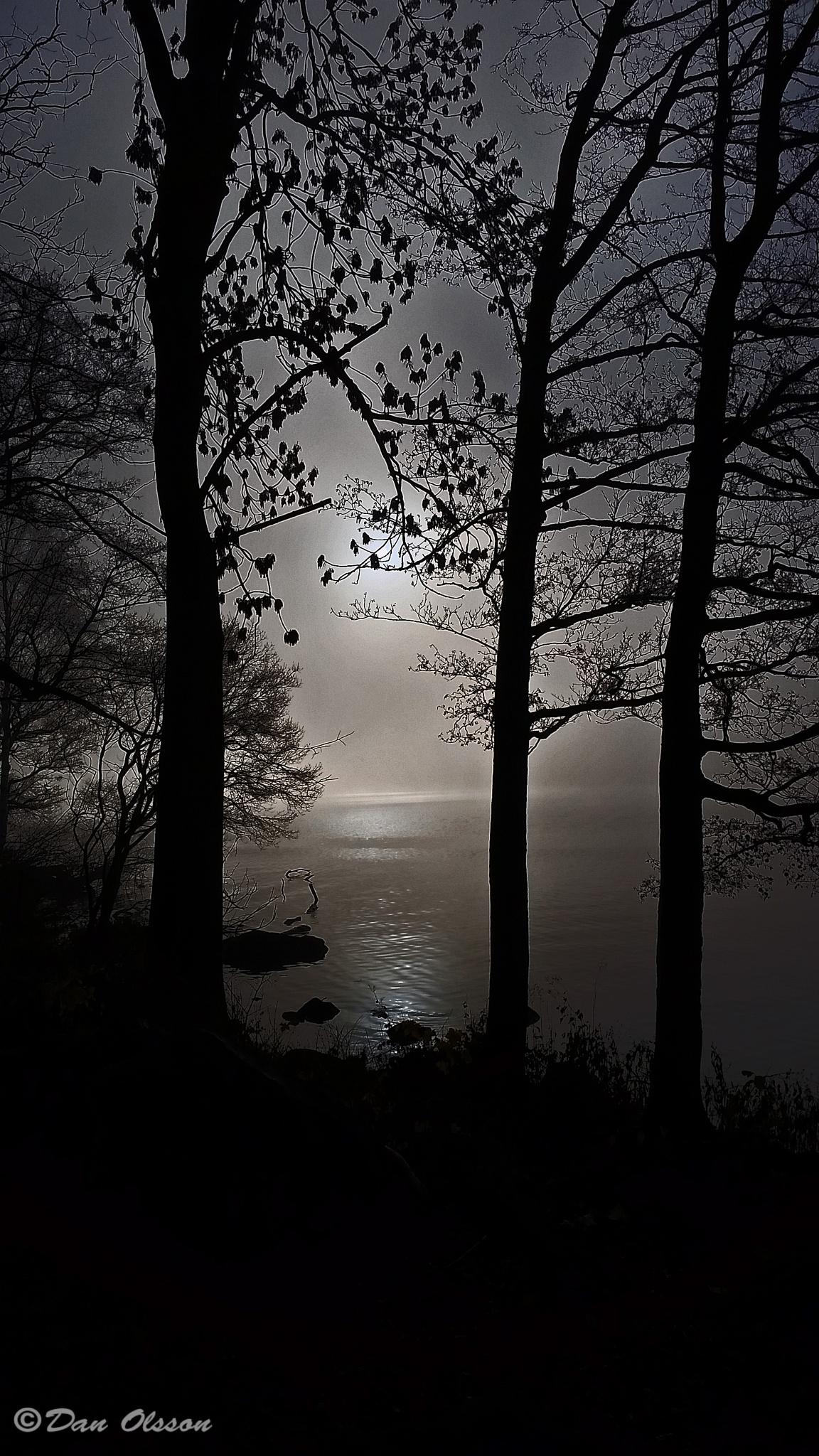Motljus i dimma, Ålsten (Into the sun in mist) by Dan Olsson