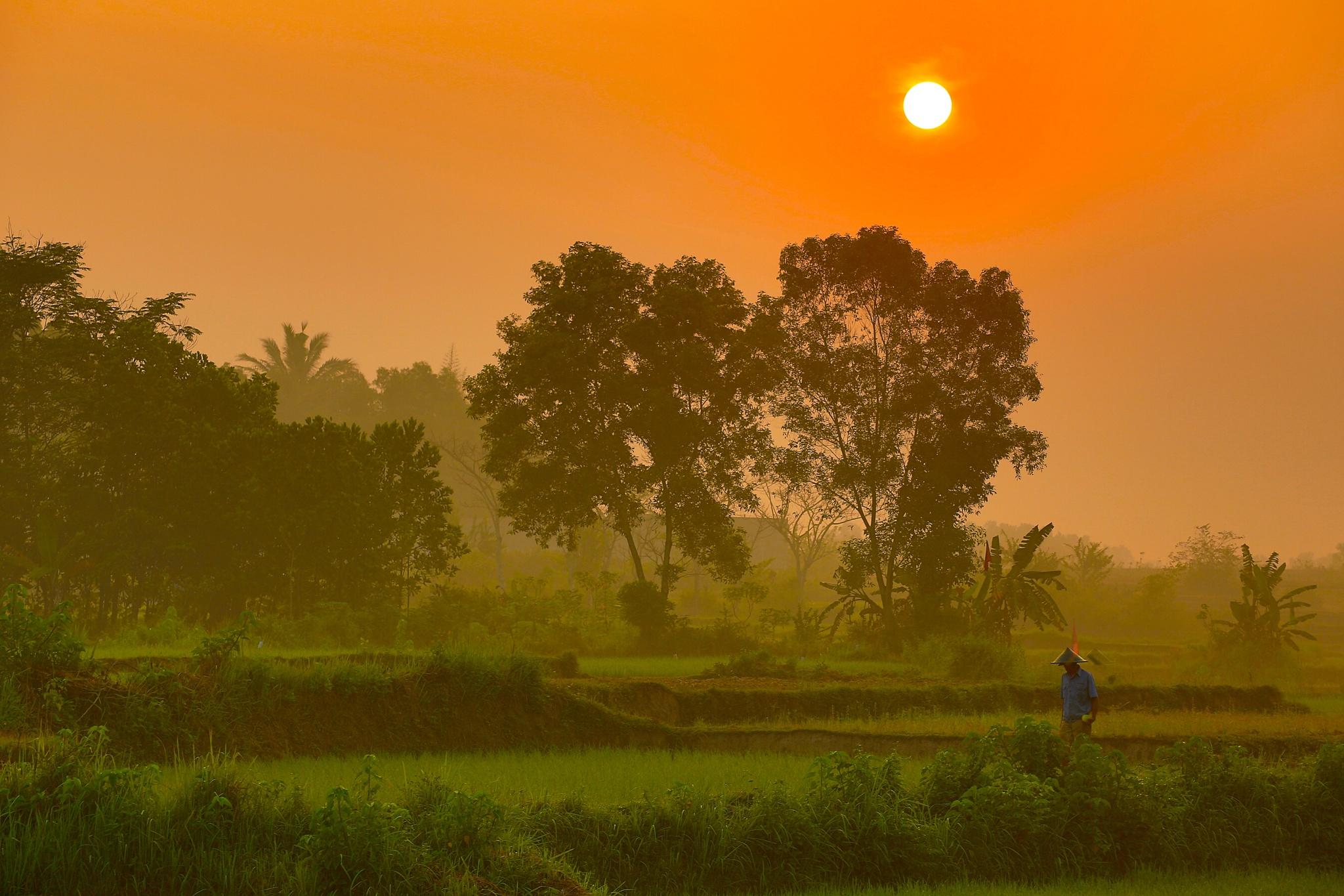 The Farmer in early morning by herrylebran