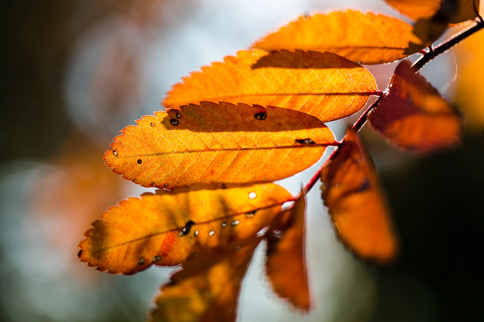 Autumn is here  by Binas