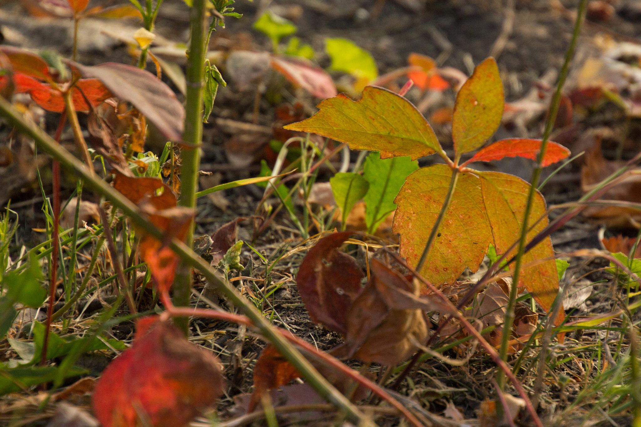 Fall Colors by shannabruns