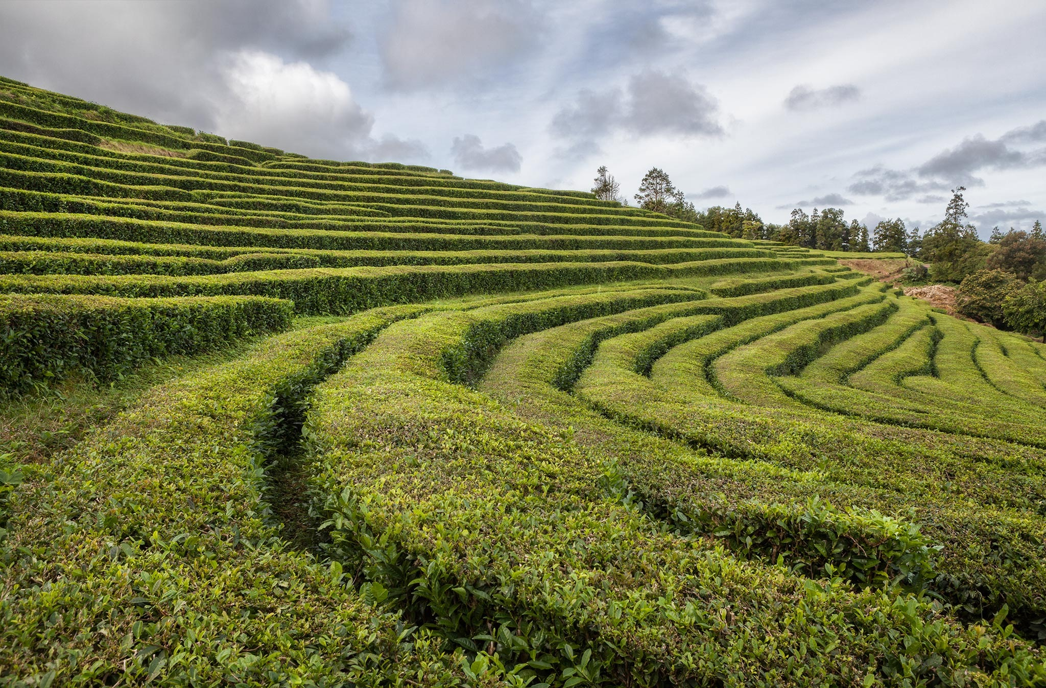 Lines in the Tea-factory by Canonmats
