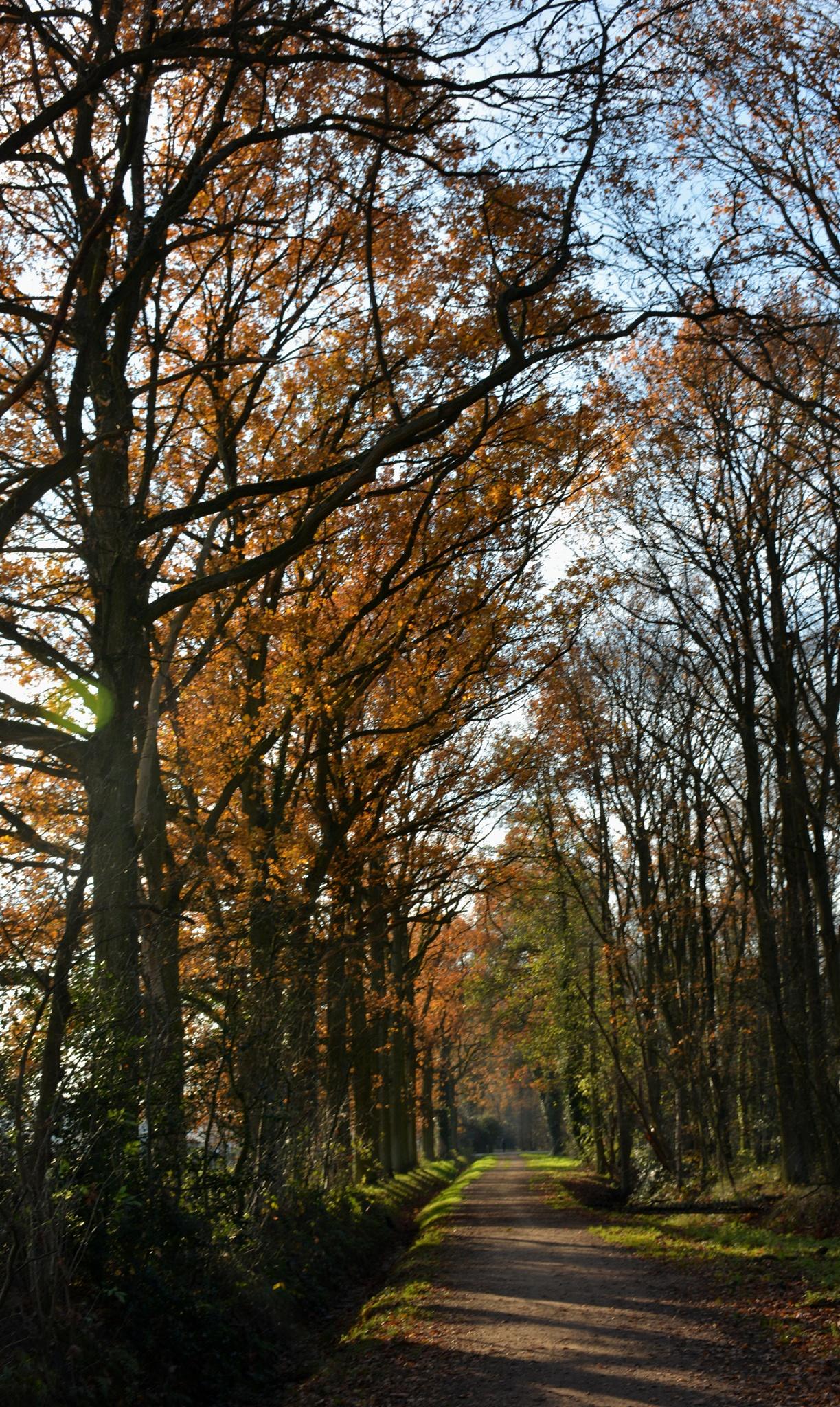 autumn... by marielouise.bosch