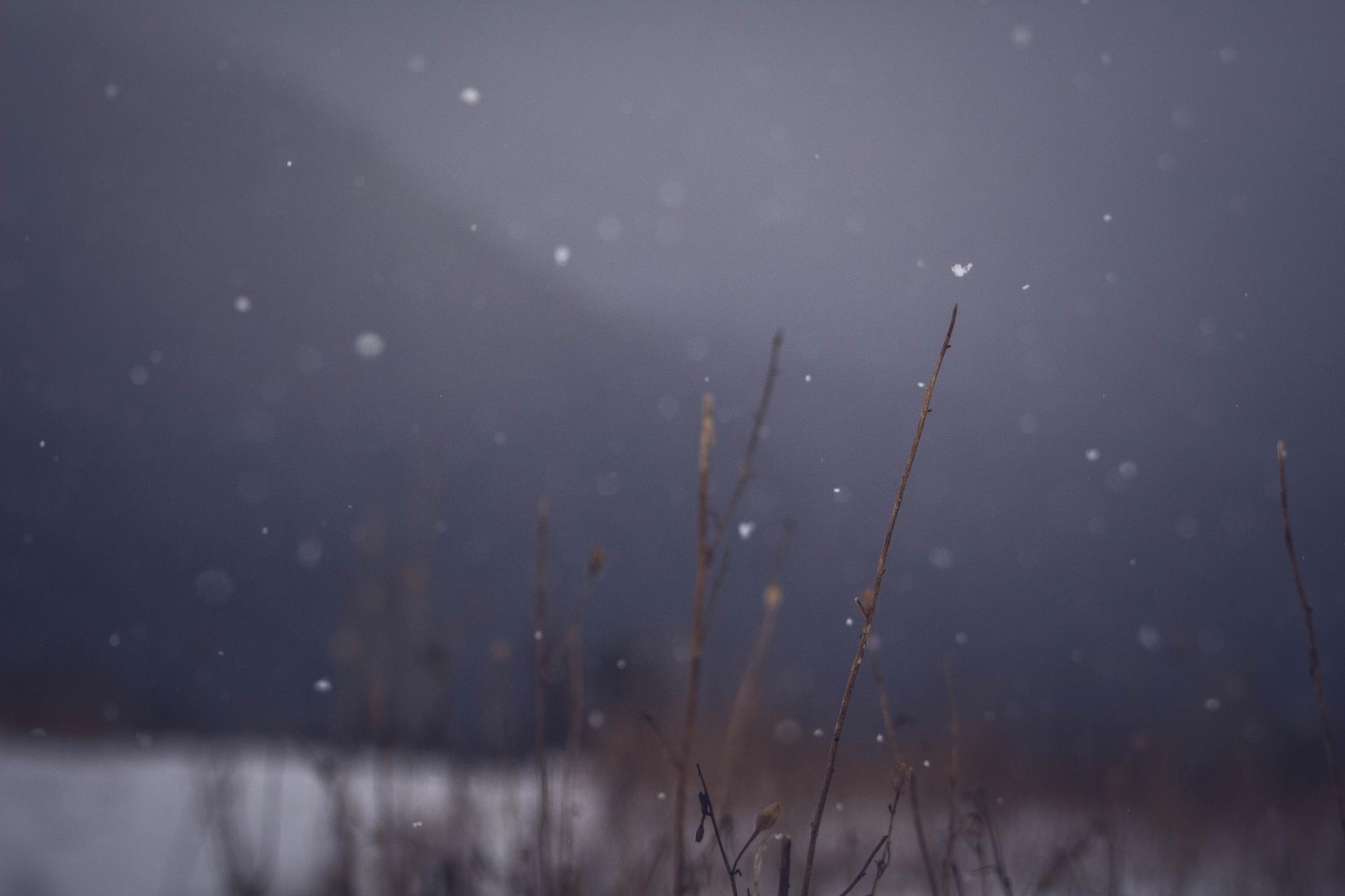 Snow by Yasna Diaz