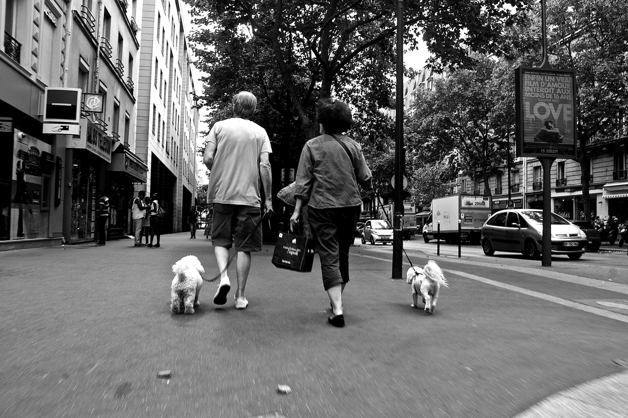 Photo in Animal #cul #paris #animal #dog #humain