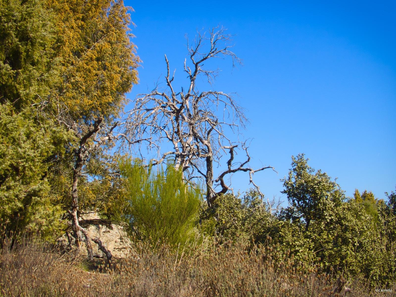 Photo in Landscape #árboles #arbustos #troncos secos #montaña #robledo de chavela #mcaguado #exterior #invierno