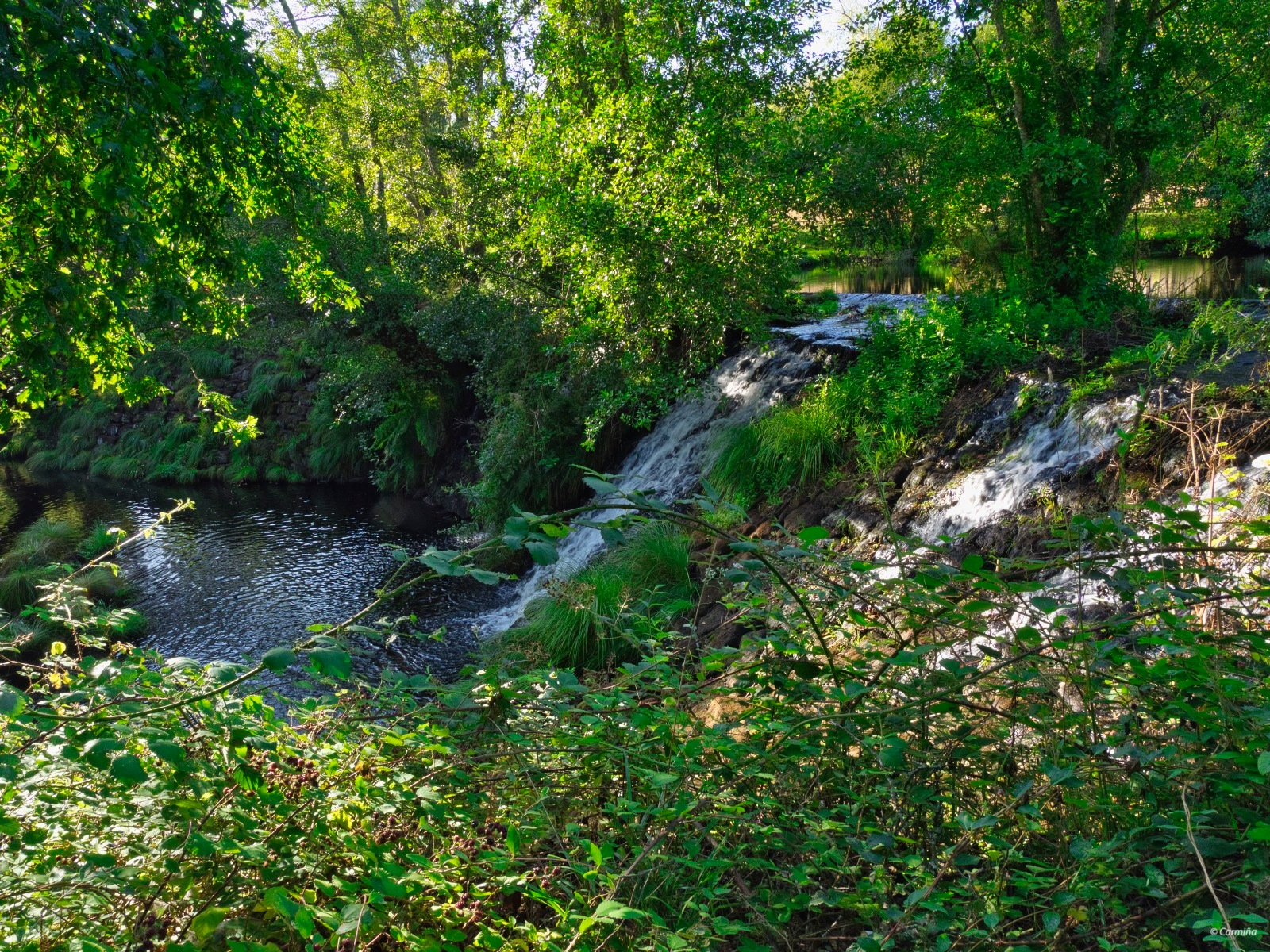 Árboles, río, cascada       by carmina.waterstone
