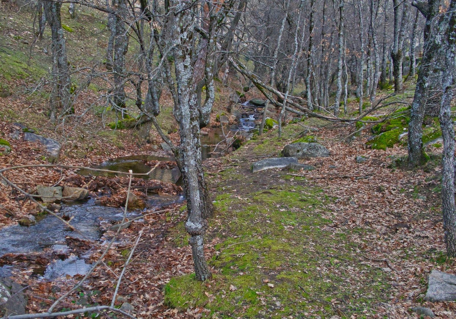 Pequeño arroyo en la montaña by carmina.waterstone