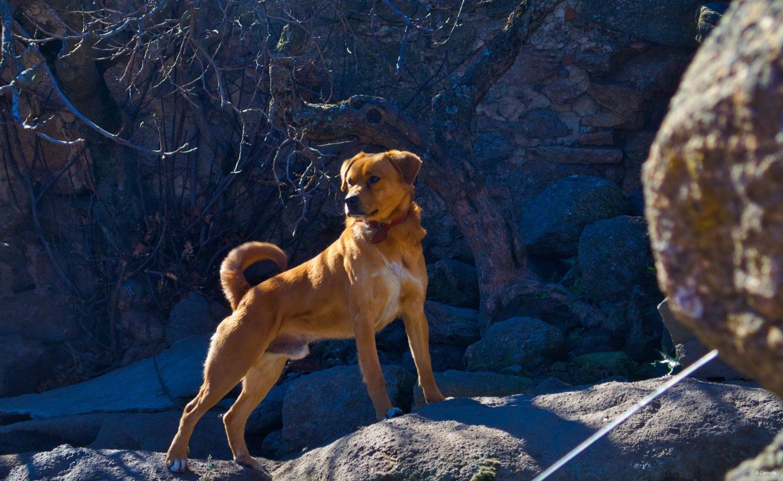 Photo in Animal #animal #perro #rocas #arbustos #montaña #mcaguado #exterior #invierno