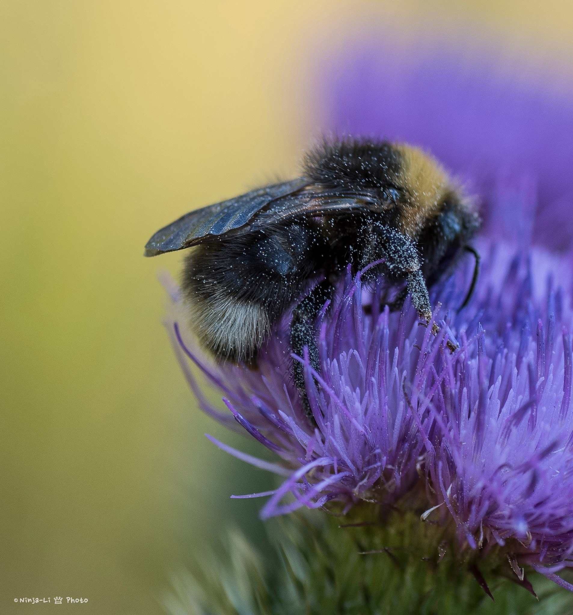 Pollination by Ninja-Li Einarsen Stahre