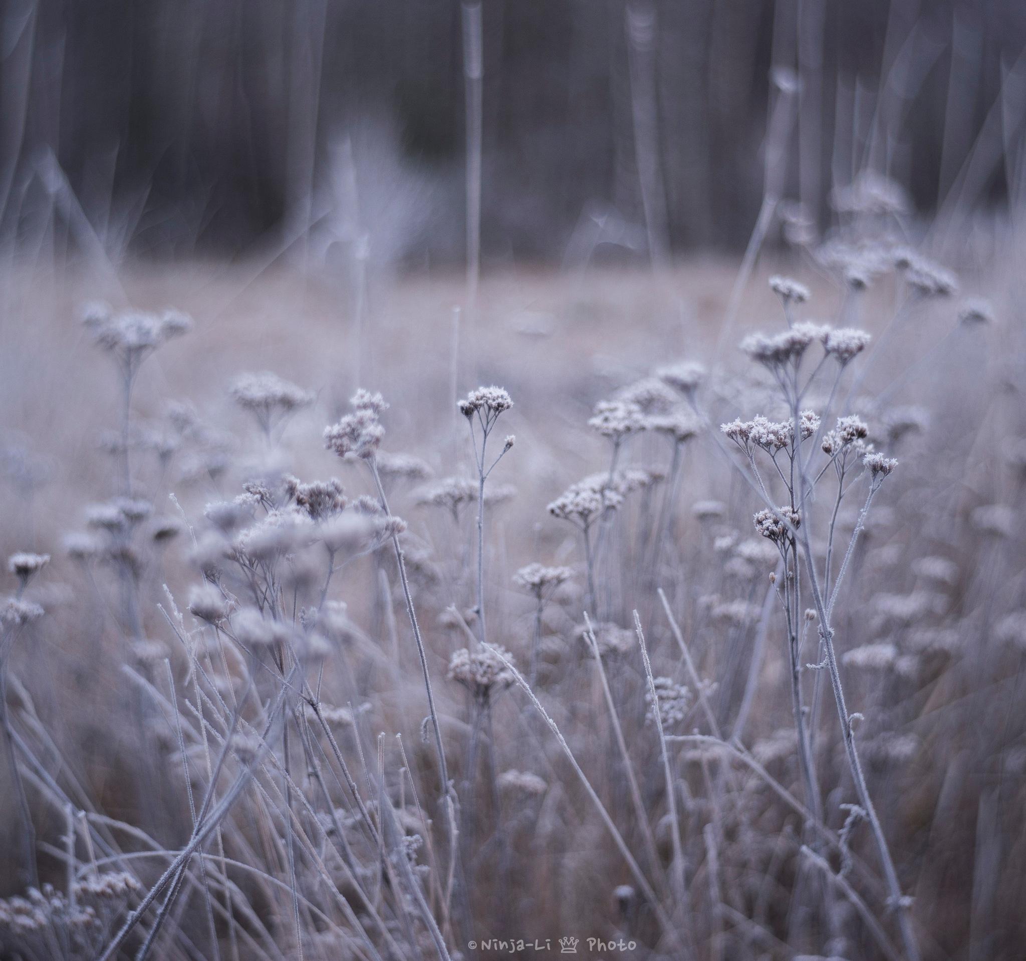 Winter meadow by ꪀⅈꪀ𝕛ꪖ-ꪶⅈ ꫀⅈꪀꪖ𝕣ડꫀꪀ ડ𝕥ꪖꫝ𝕣ꫀ