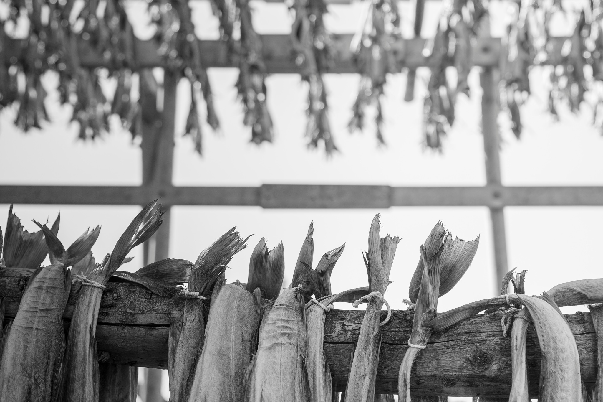 Drying fish by Ninja-Li Einarsen Stahre