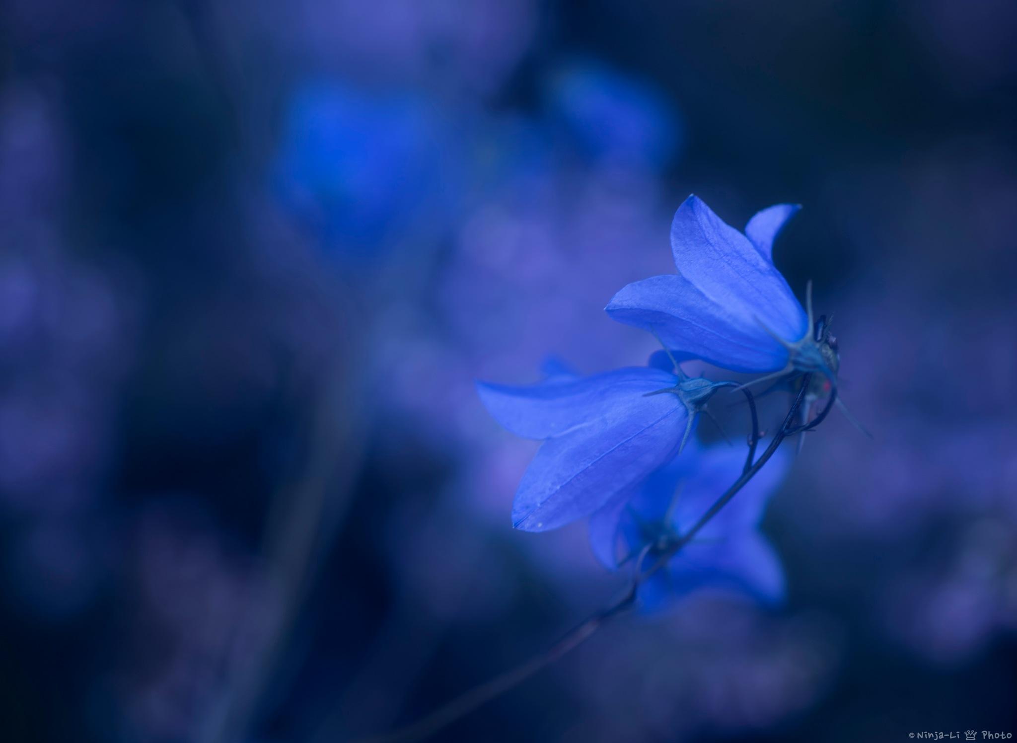 Summer night blues by Ninja-Li Einarsen Stahre