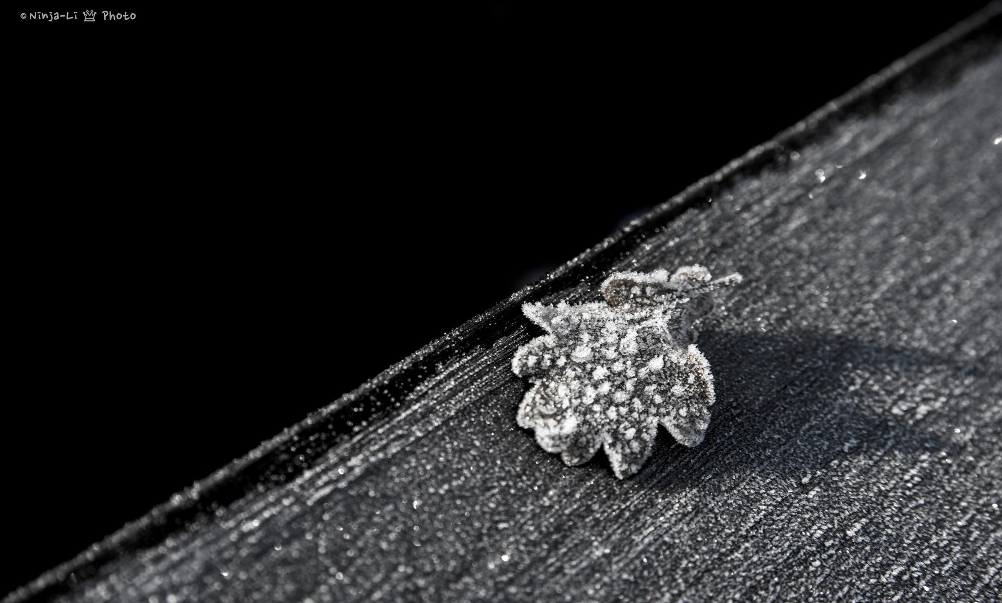 Leaf by Ninja-Li Einarsen Stahre