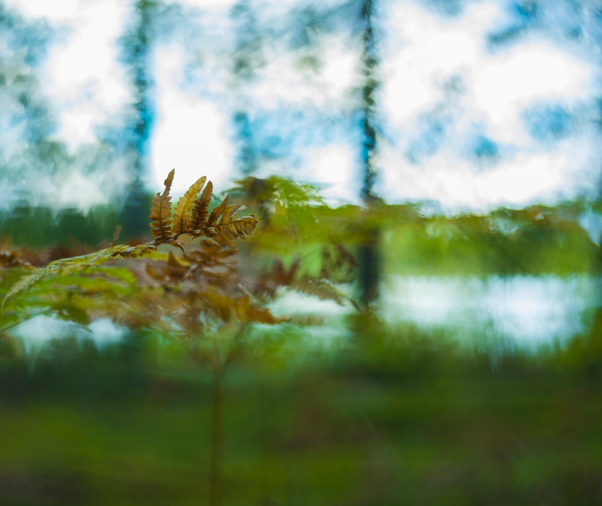 Autumn colors by Ninja-Li Einarsen Stahre