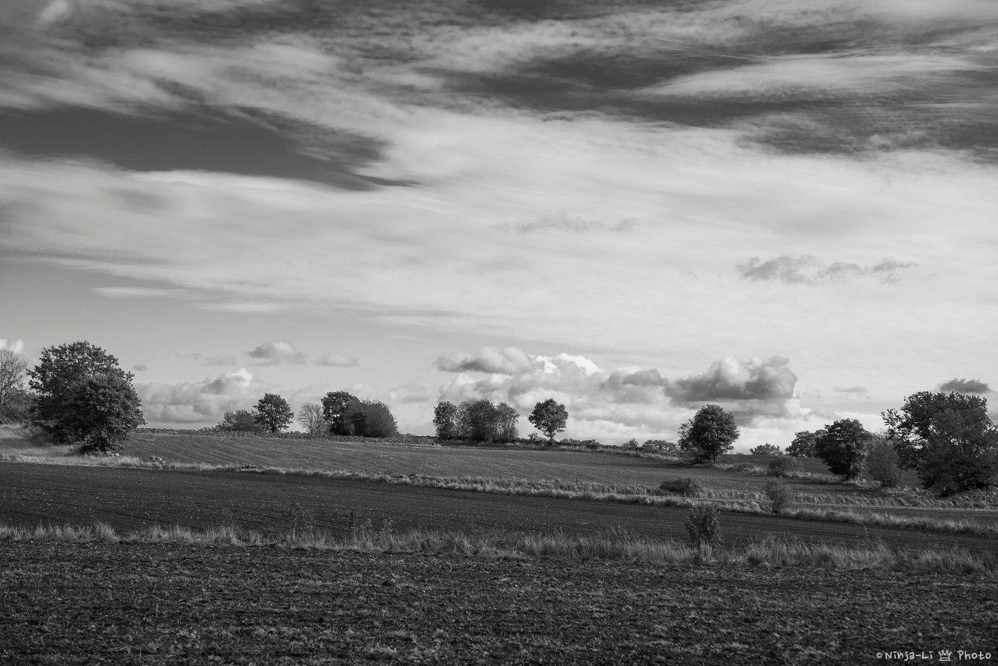 Fields by Ninja-Li Einarsen Stahre