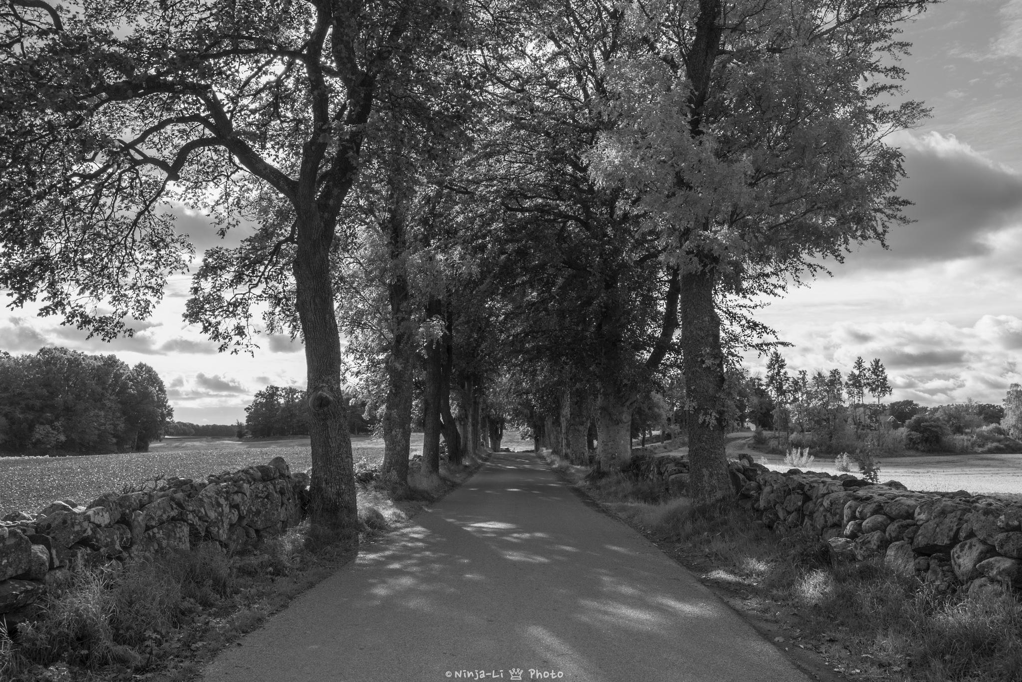 Beautiful road by Ninja-Li Einarsen Stahre