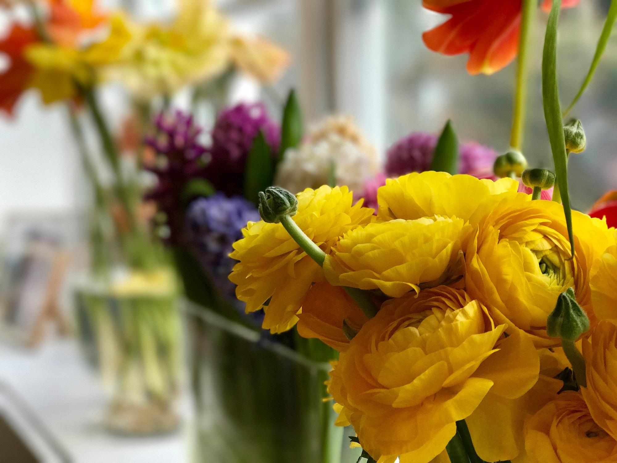 Flowers  by Andrea Papageorgiu