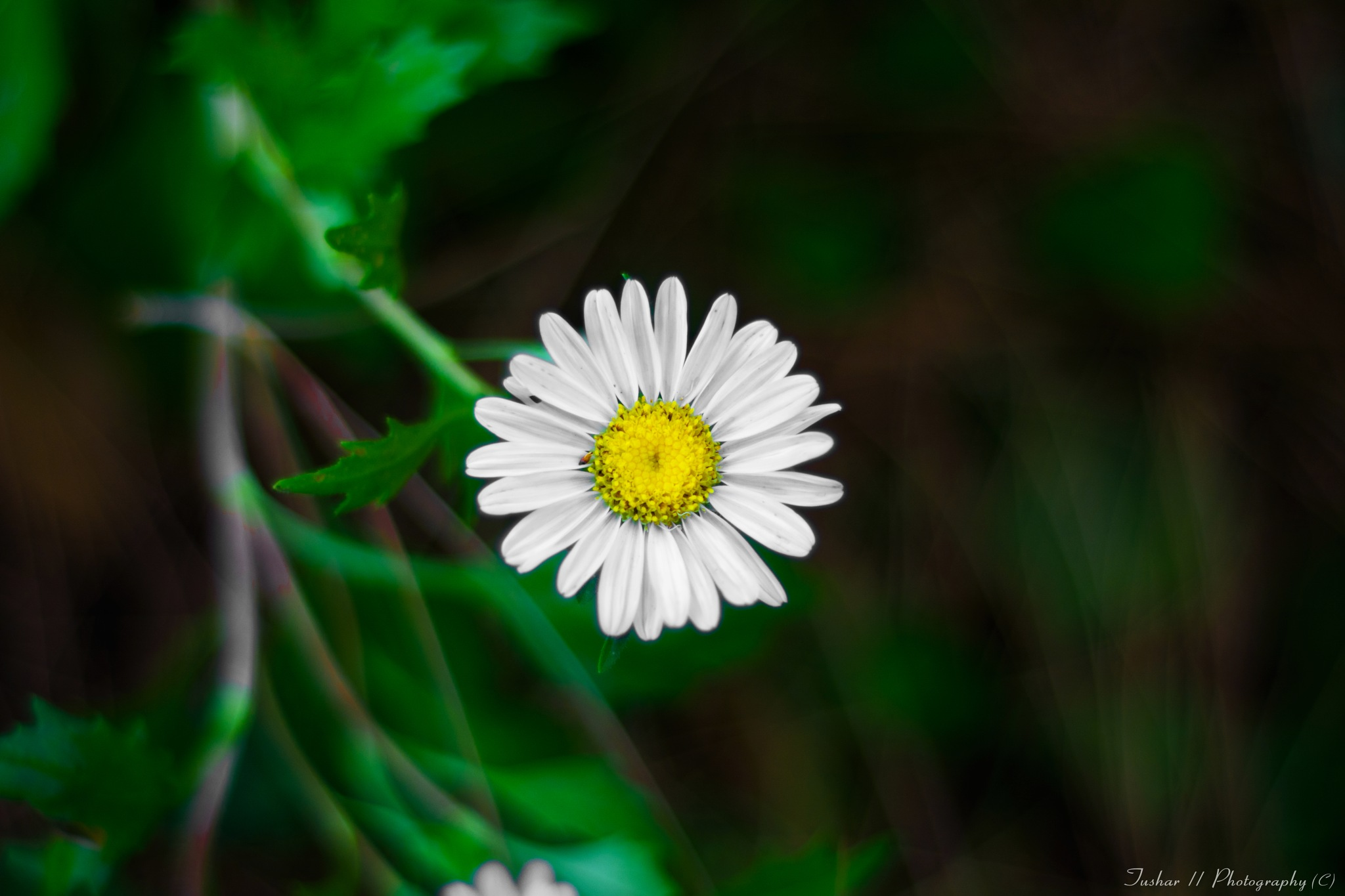 Politeness is the flower of humanity. by Tushar Thakur