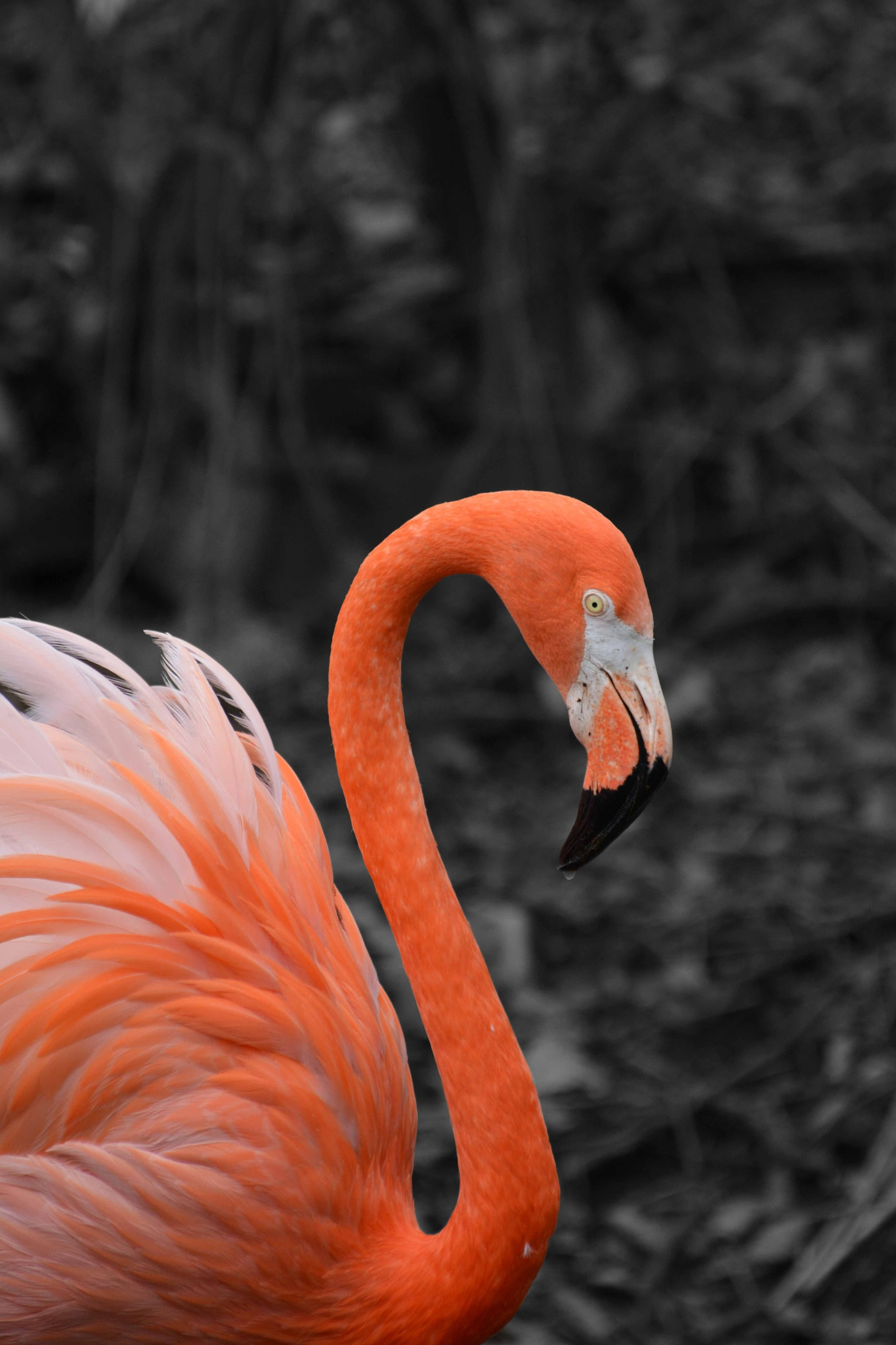 Flamingo by stacey legg
