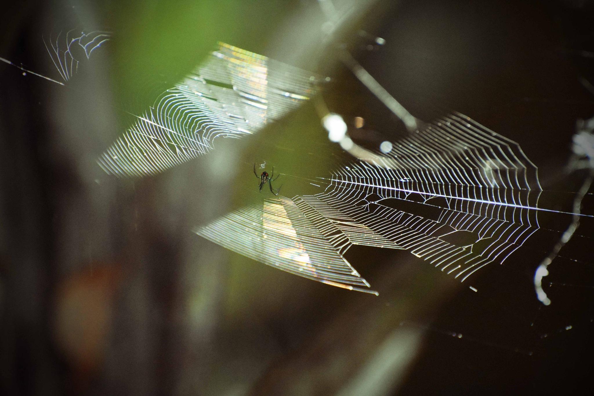 Swamp Spider by stacey legg
