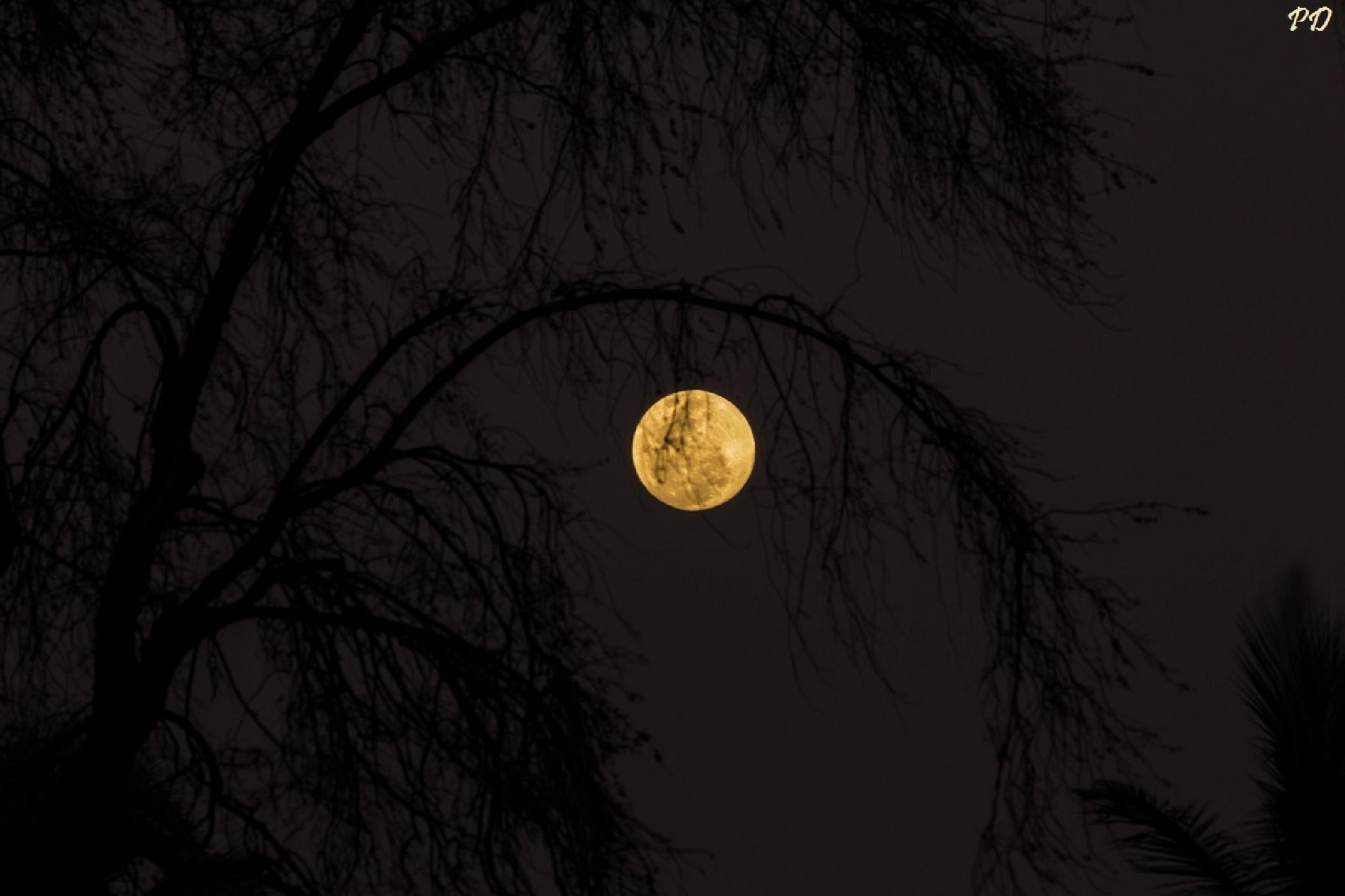 Eye of the sky by prajeshdutta