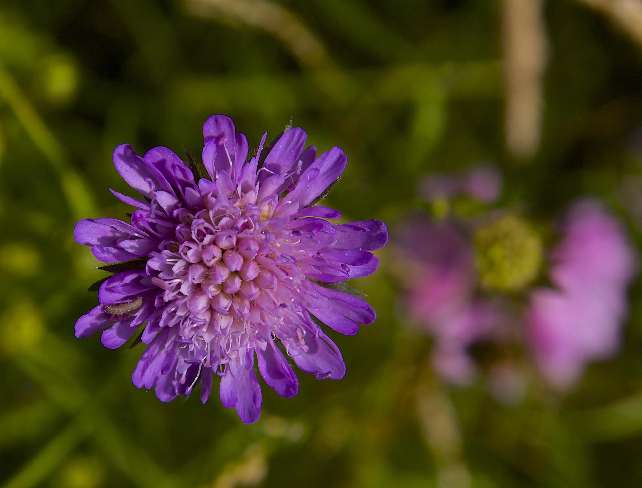 Flower with a caterpillar by Azucena Kouwenhoven