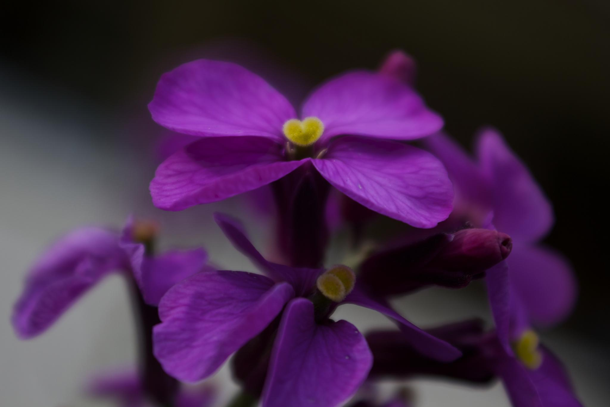 flower by Azucena Kouwenhoven