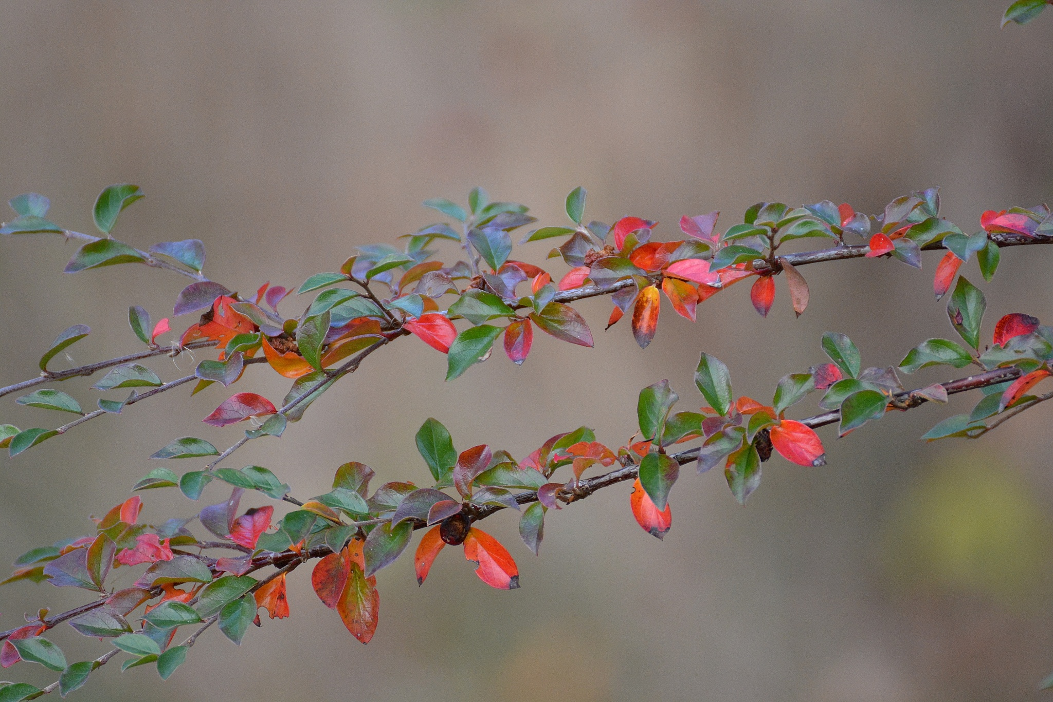 Autumn`s coming,, by Staffan Larsson