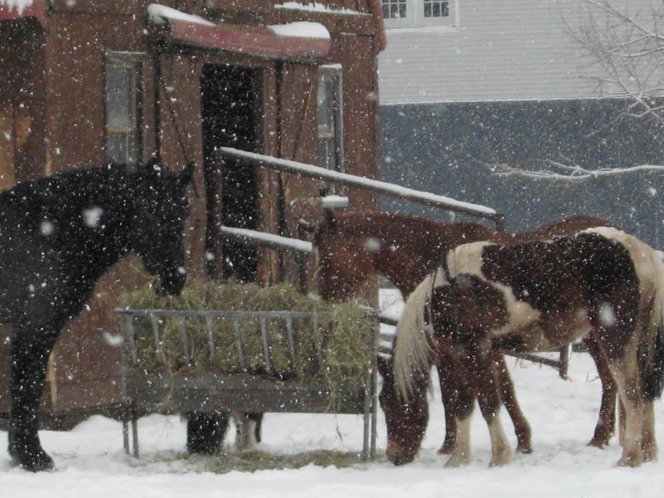 Long winter by MarciaRobertsMikels