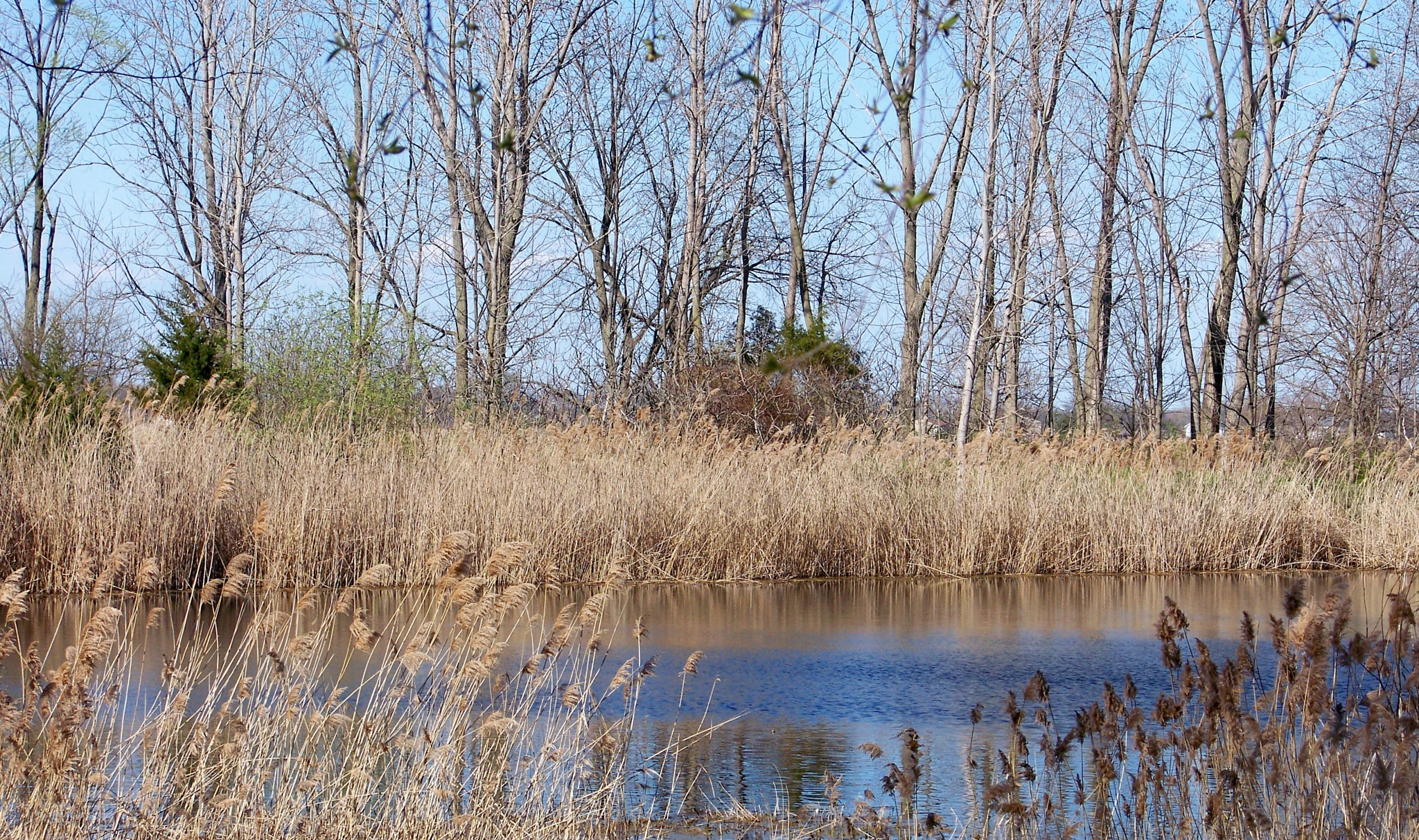Early spring at the farm pond by RebeccaTammen