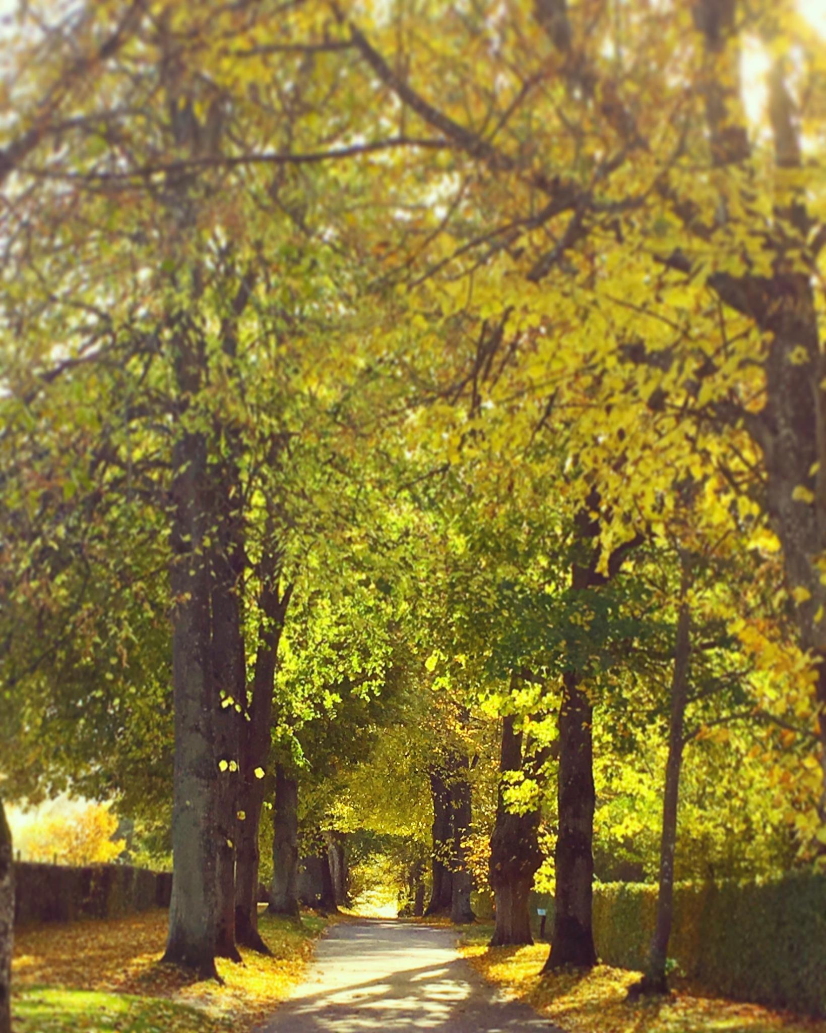 collors of autumn  by zinajda.besic
